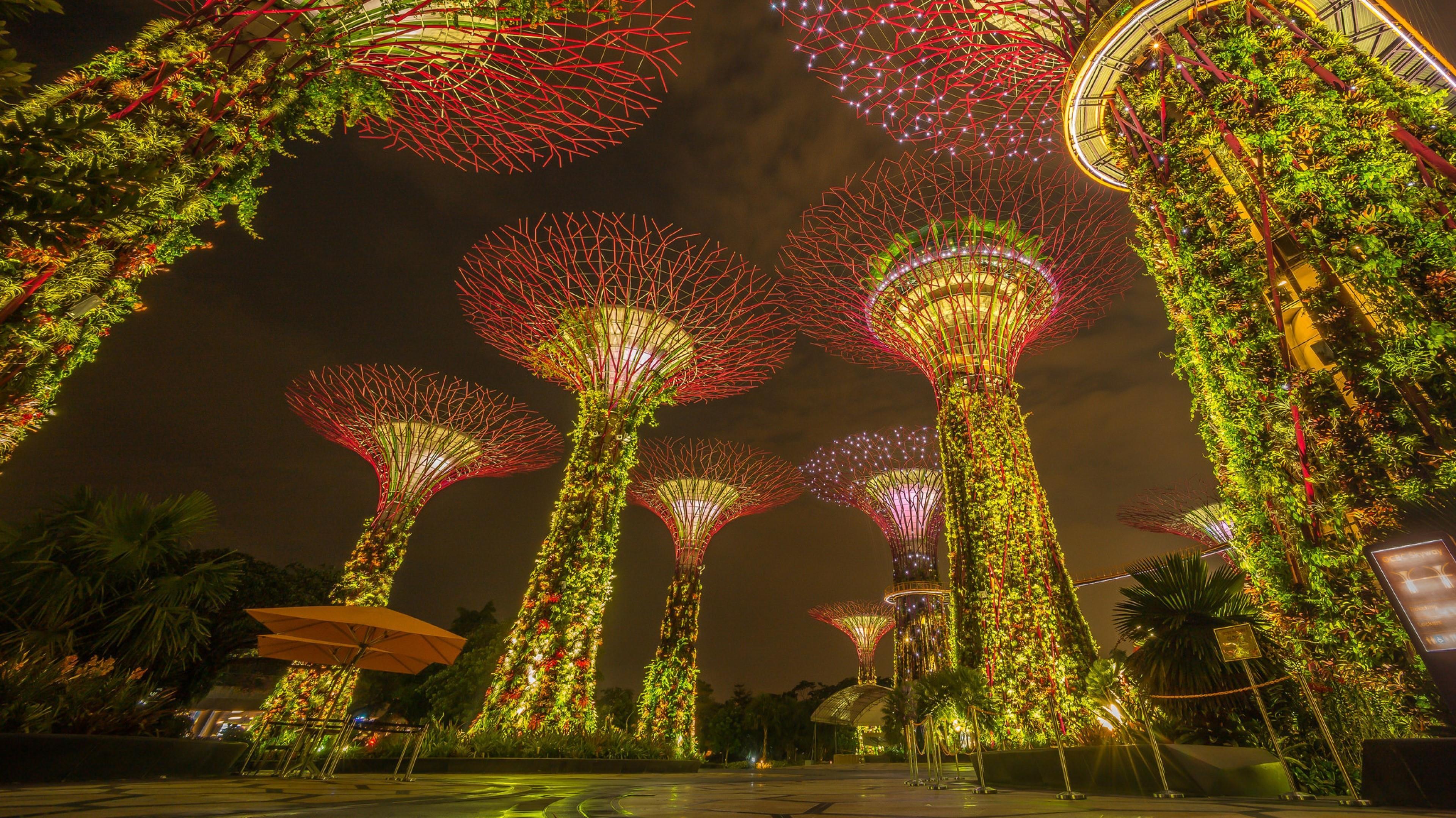 Supertree Grove (Singapore) wallpaper