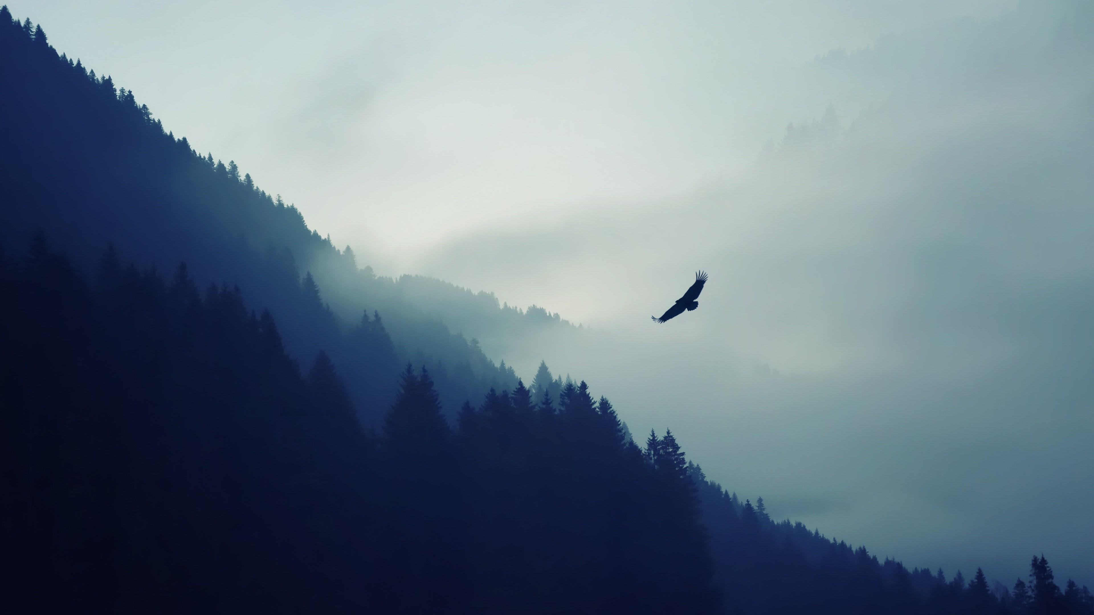 Eagle flies over the forest wallpaper