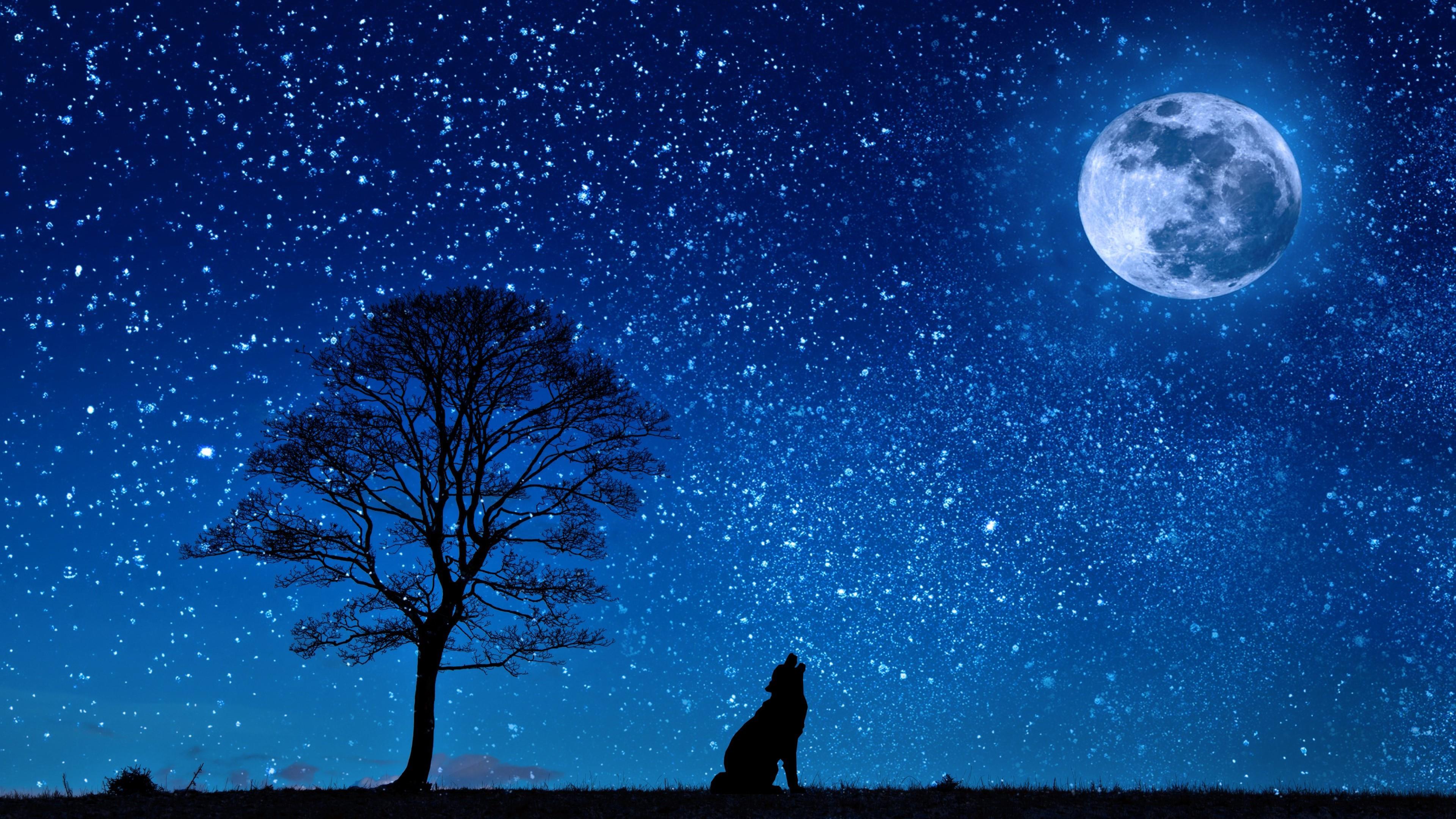 Wolf ib the full moon wallpaper