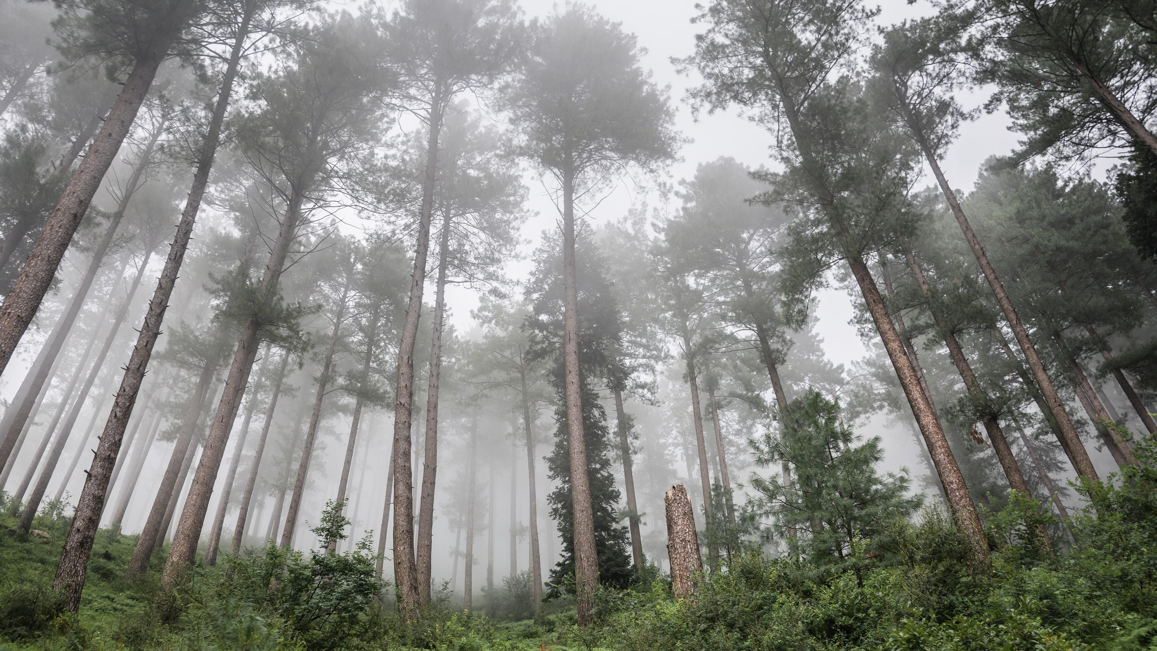 Misty forest in Pakistan ☁️☁️ wallpaper