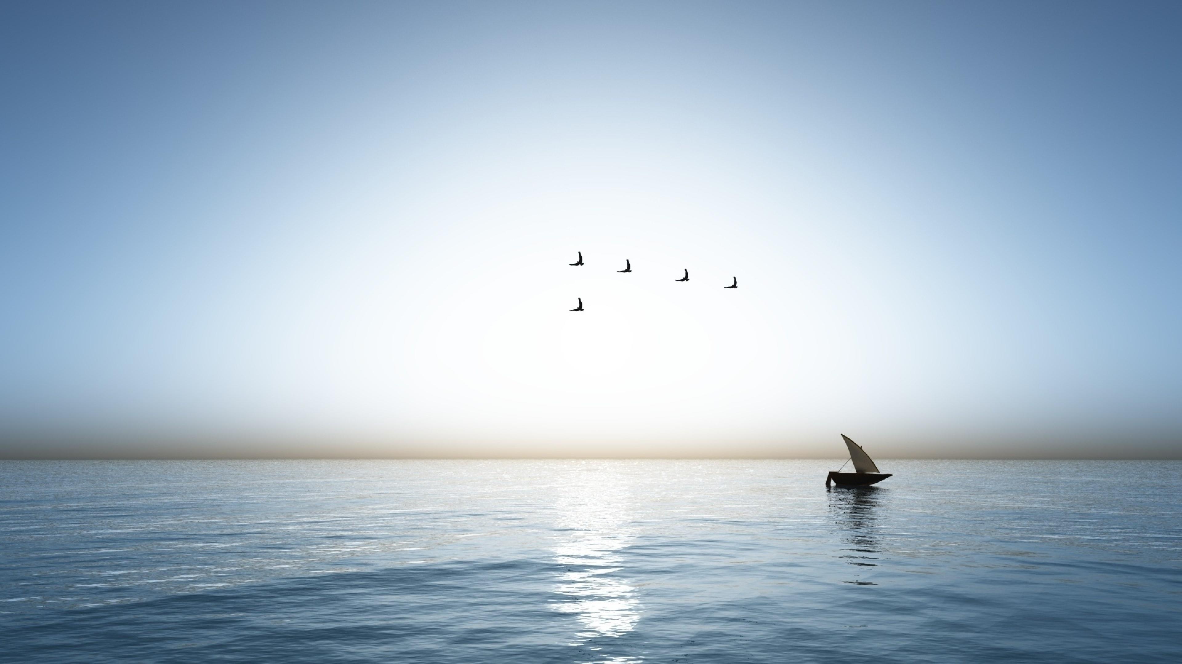 Seabirds in the blue sky wallpaper