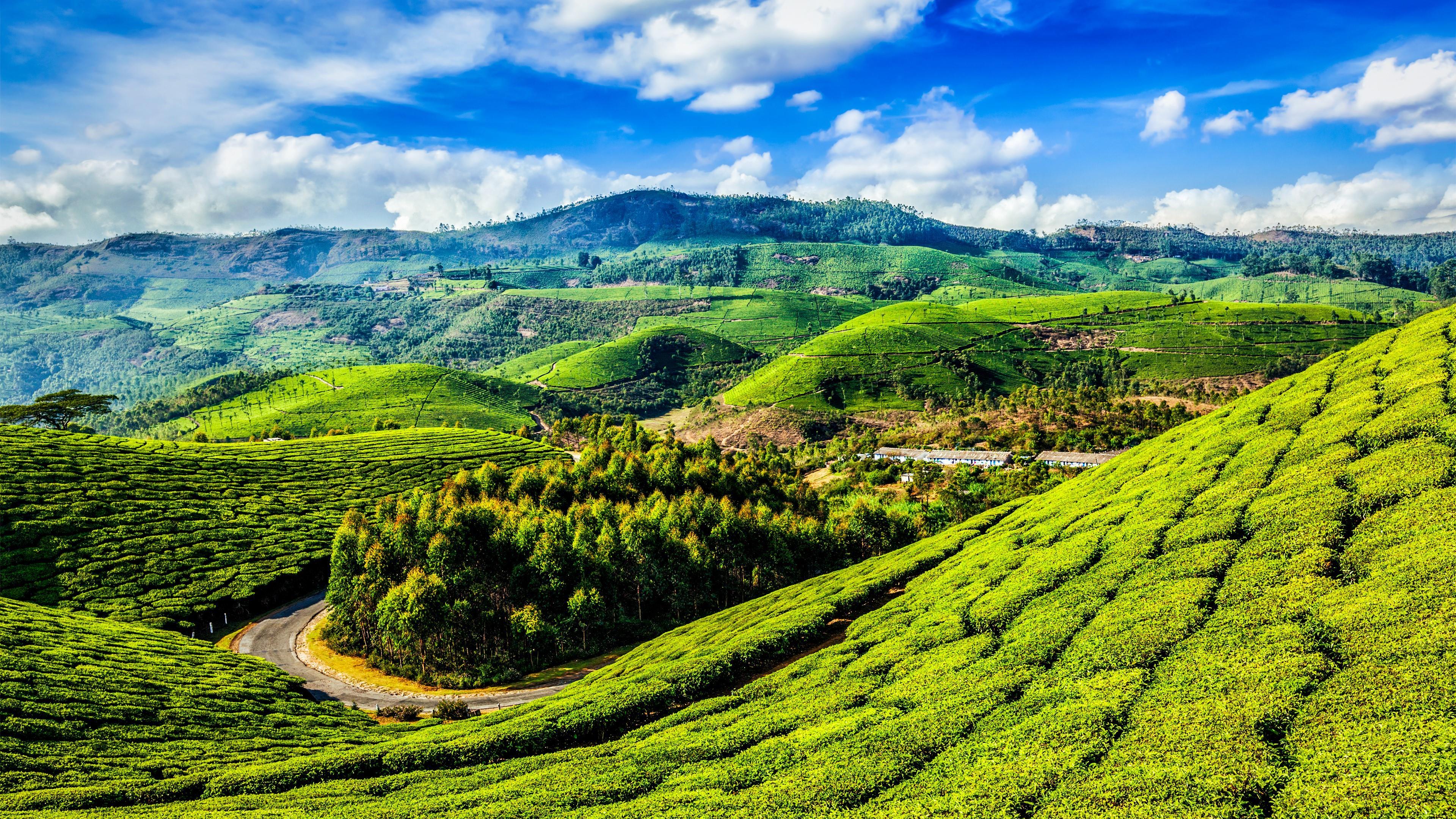 Hill Slopes With Tea Plantations - India 4K UltraHD ...