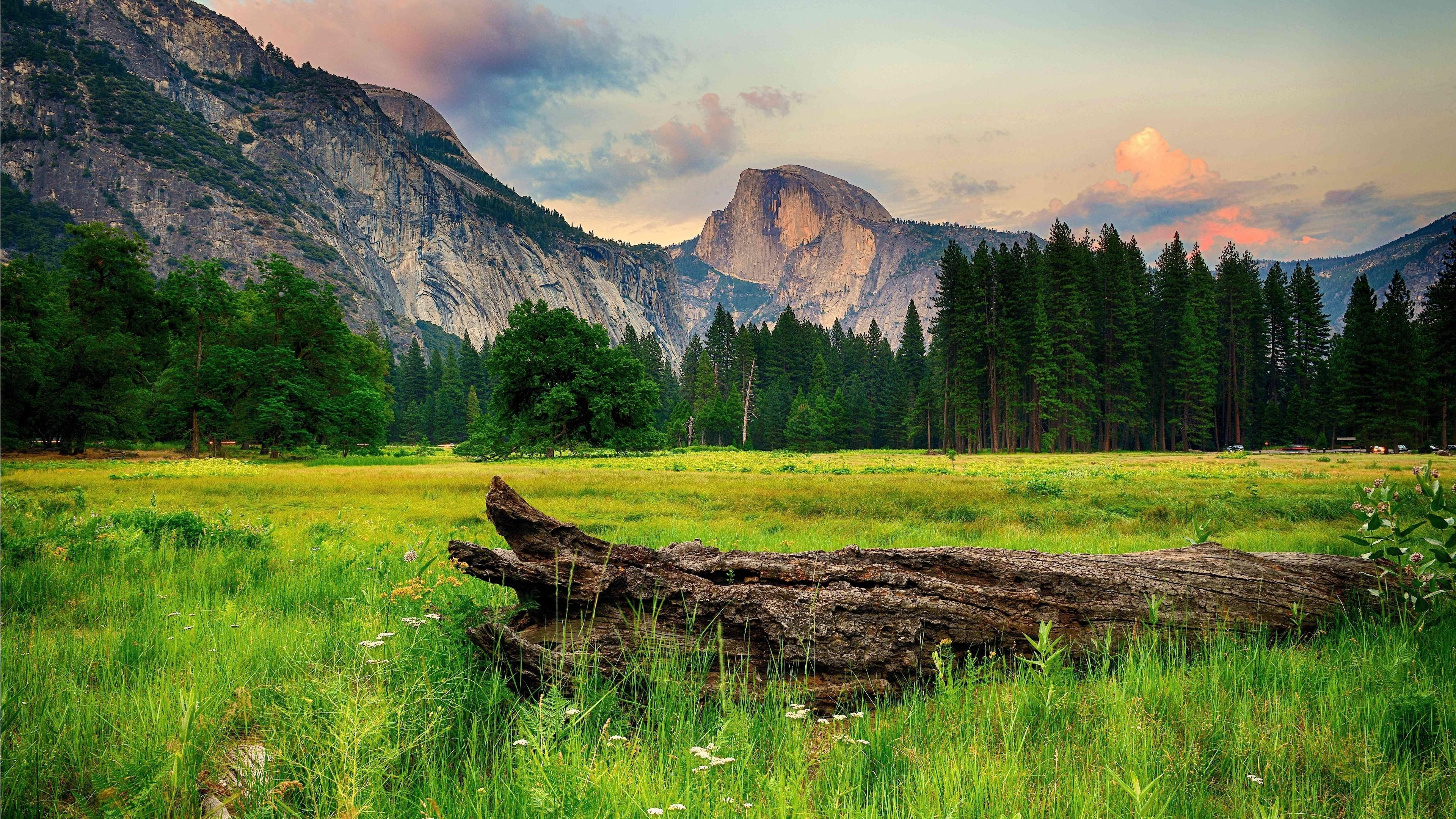 Half Dome from the Ahwahnee Meadow, Yosemite Valley wallpaper