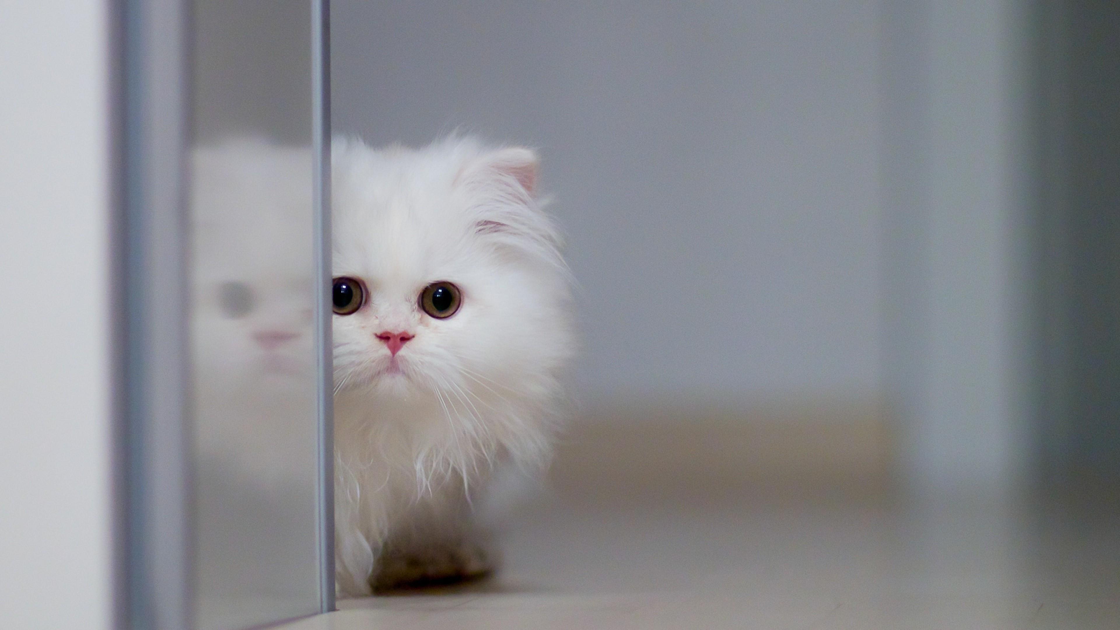 Cute cat  wallpaper