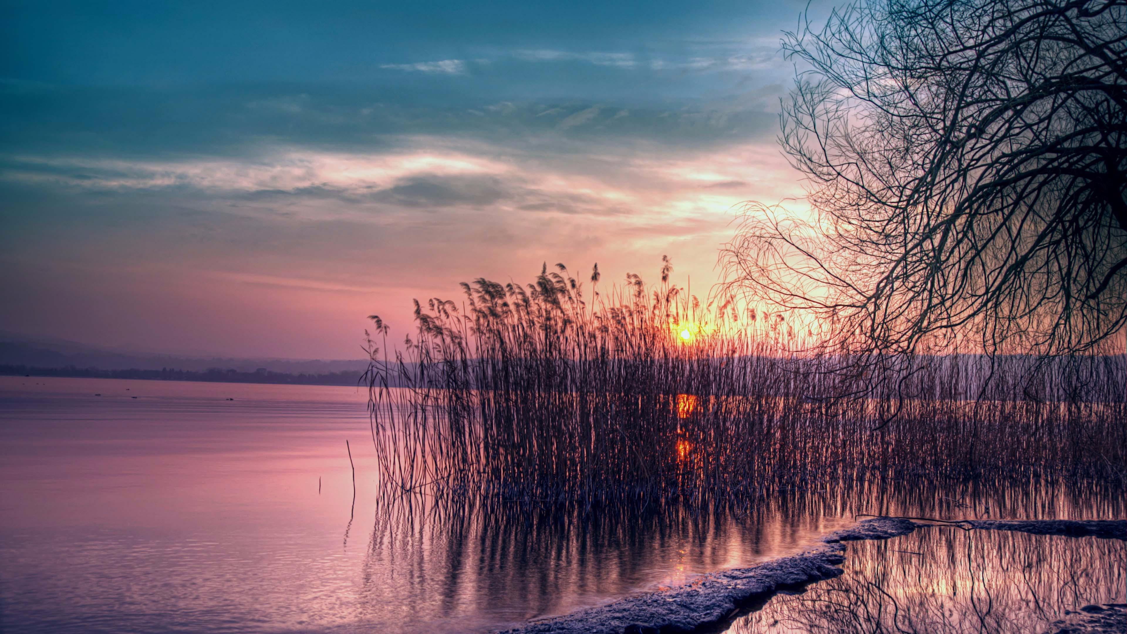Sunset among the reeds wallpaper