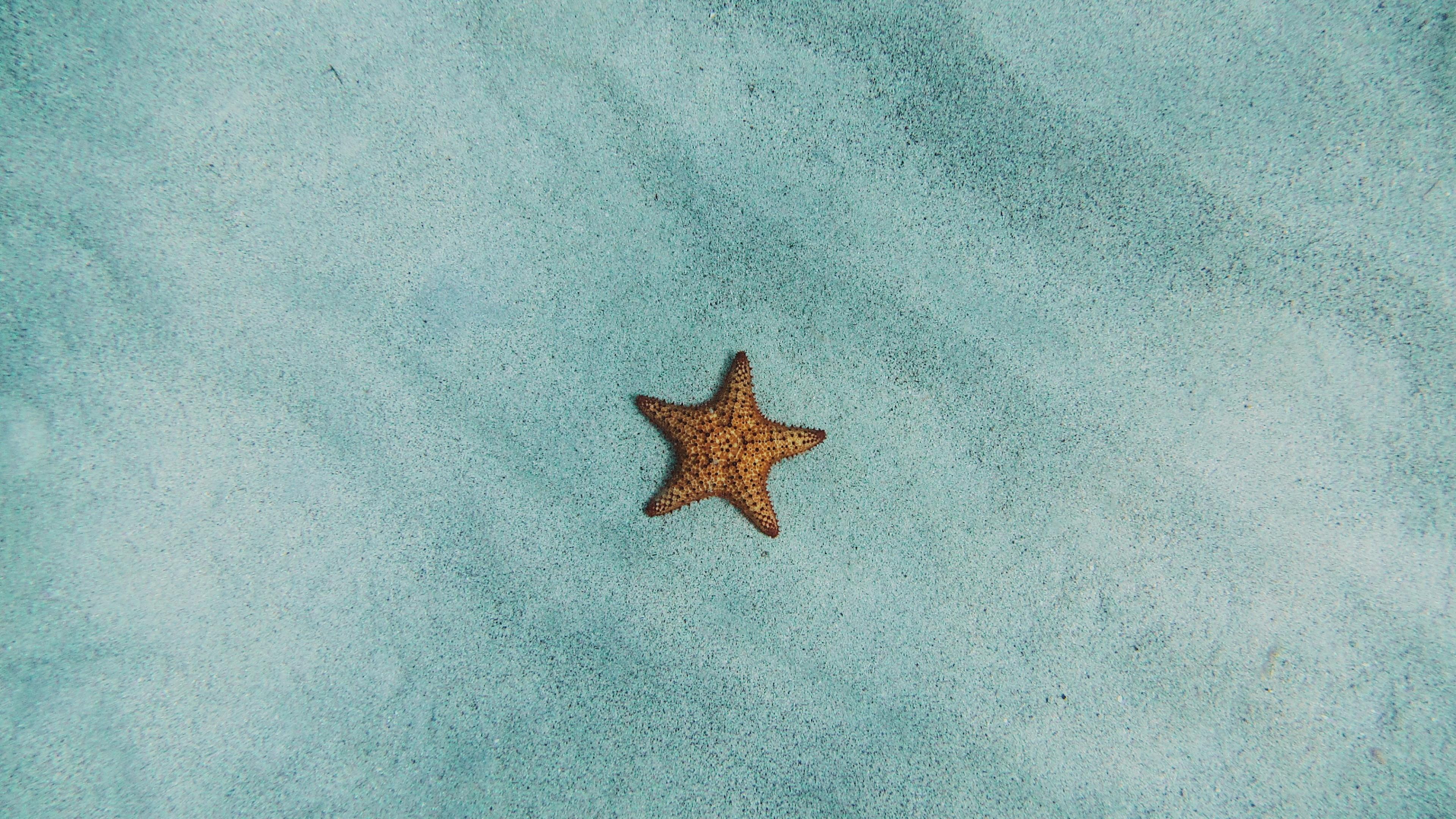 Starfish in the sea wallpaper