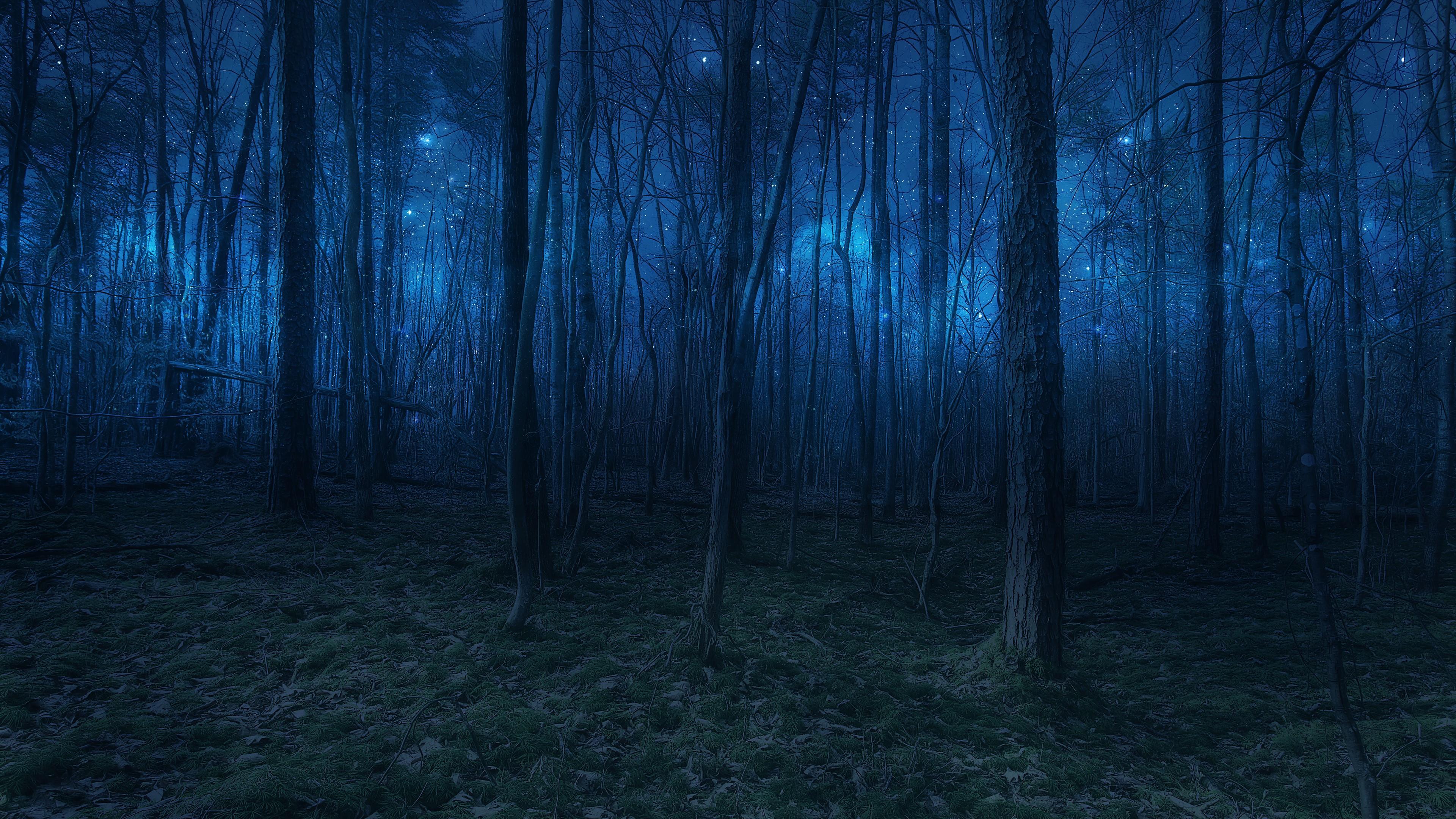 Starlights in twilight wallpaper