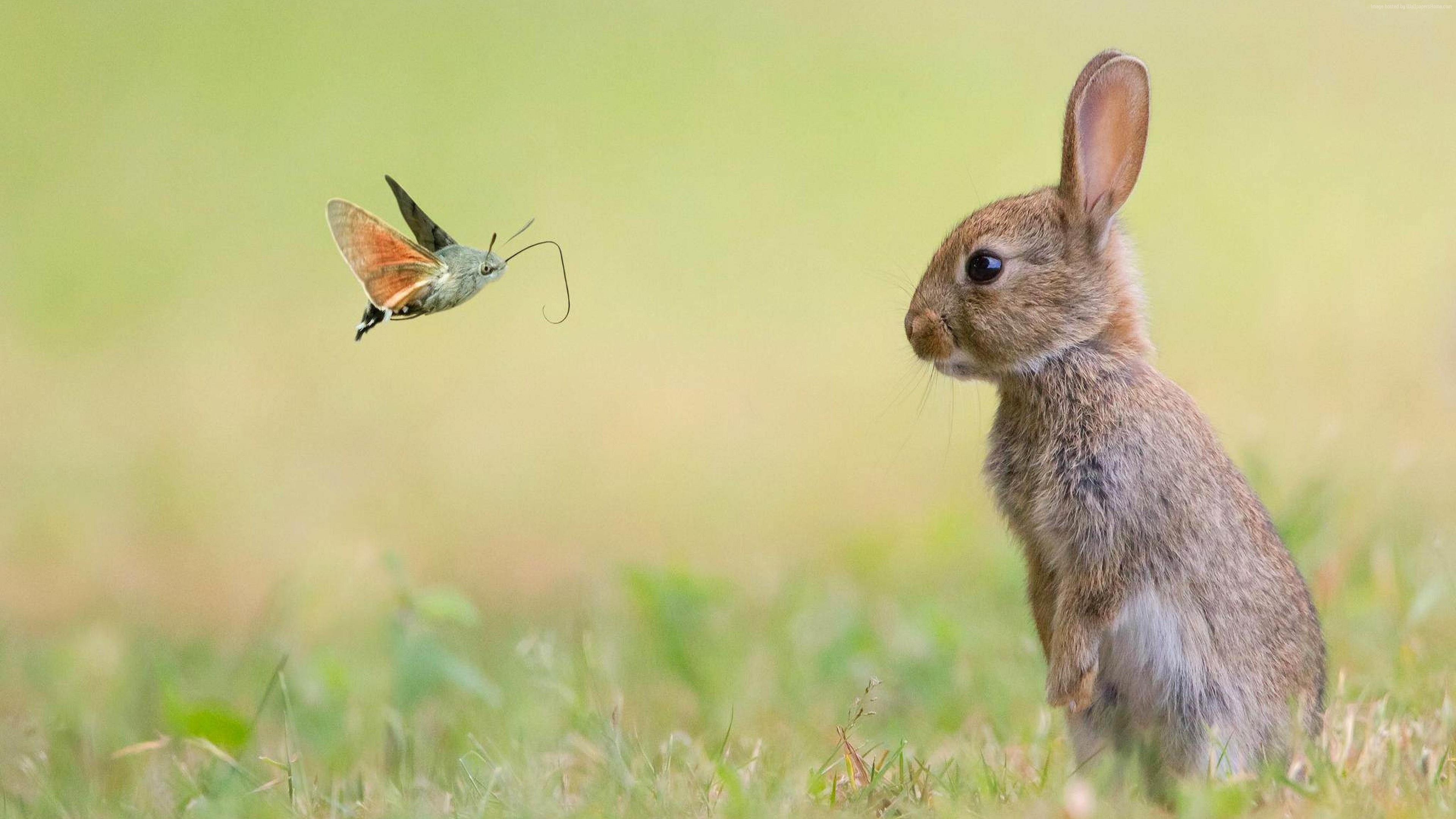 Rabbit meets with a butterfly wallpaper