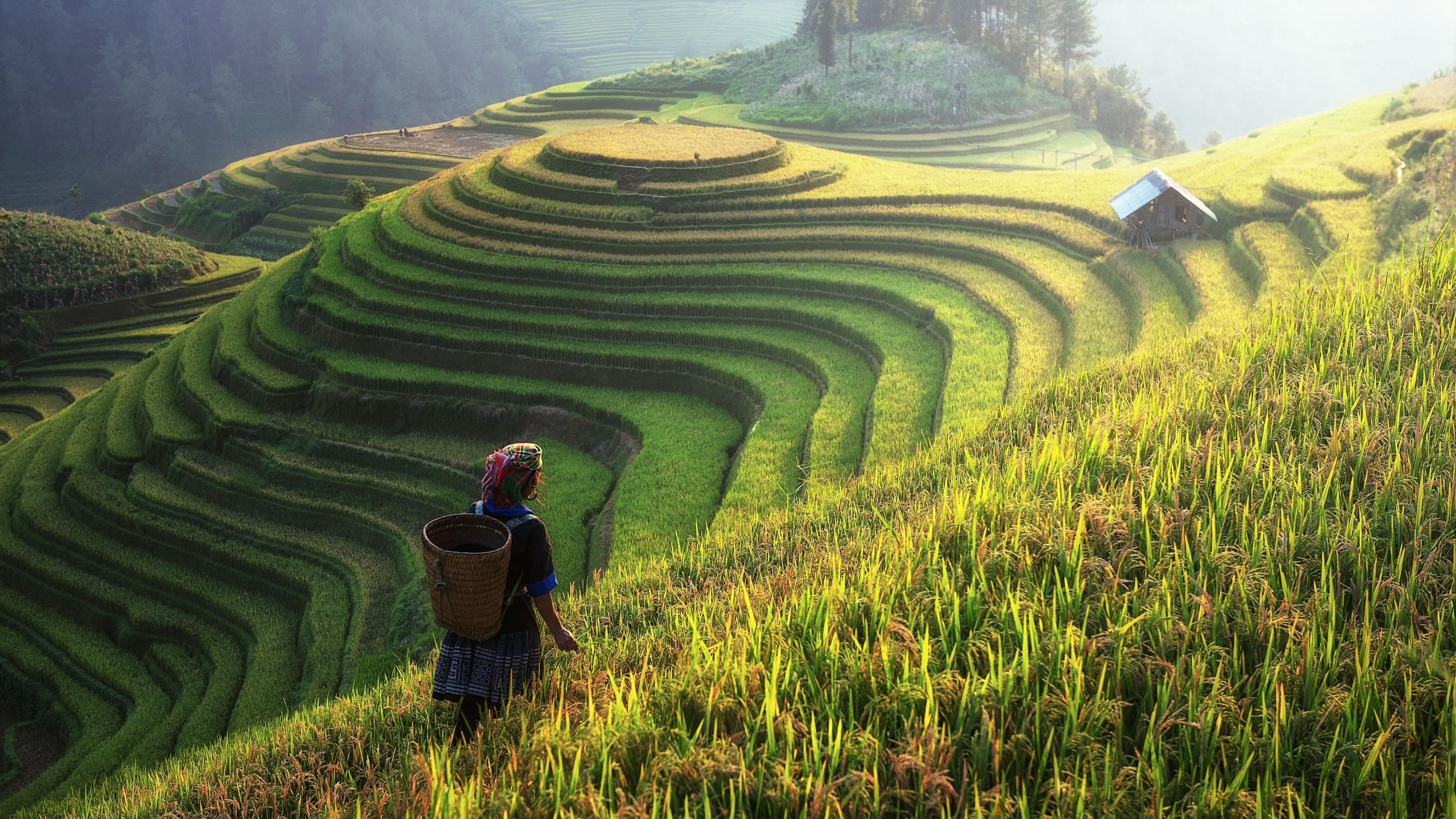 Rice terraces in China wallpaper