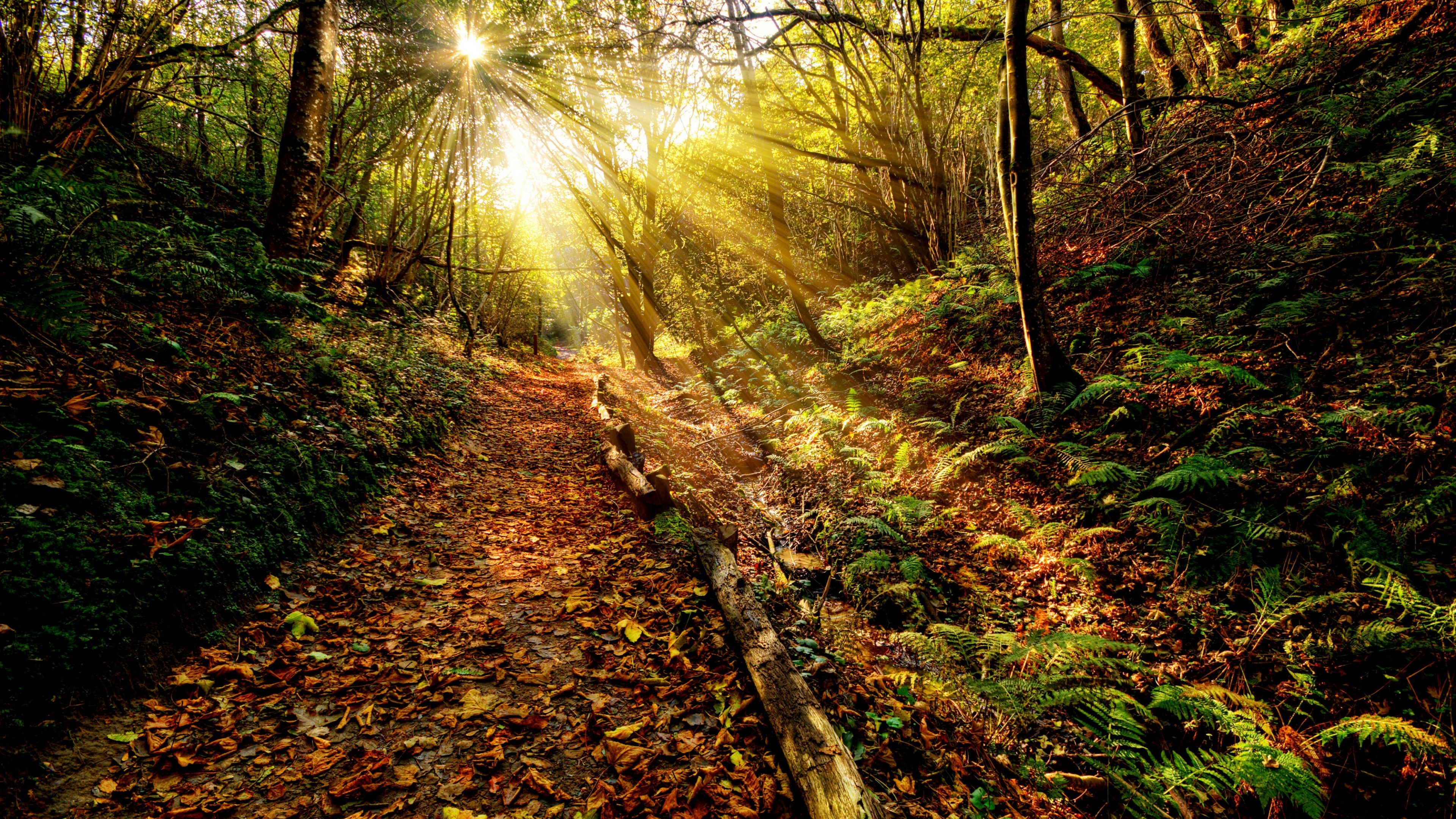 Golden forest path wallpaper