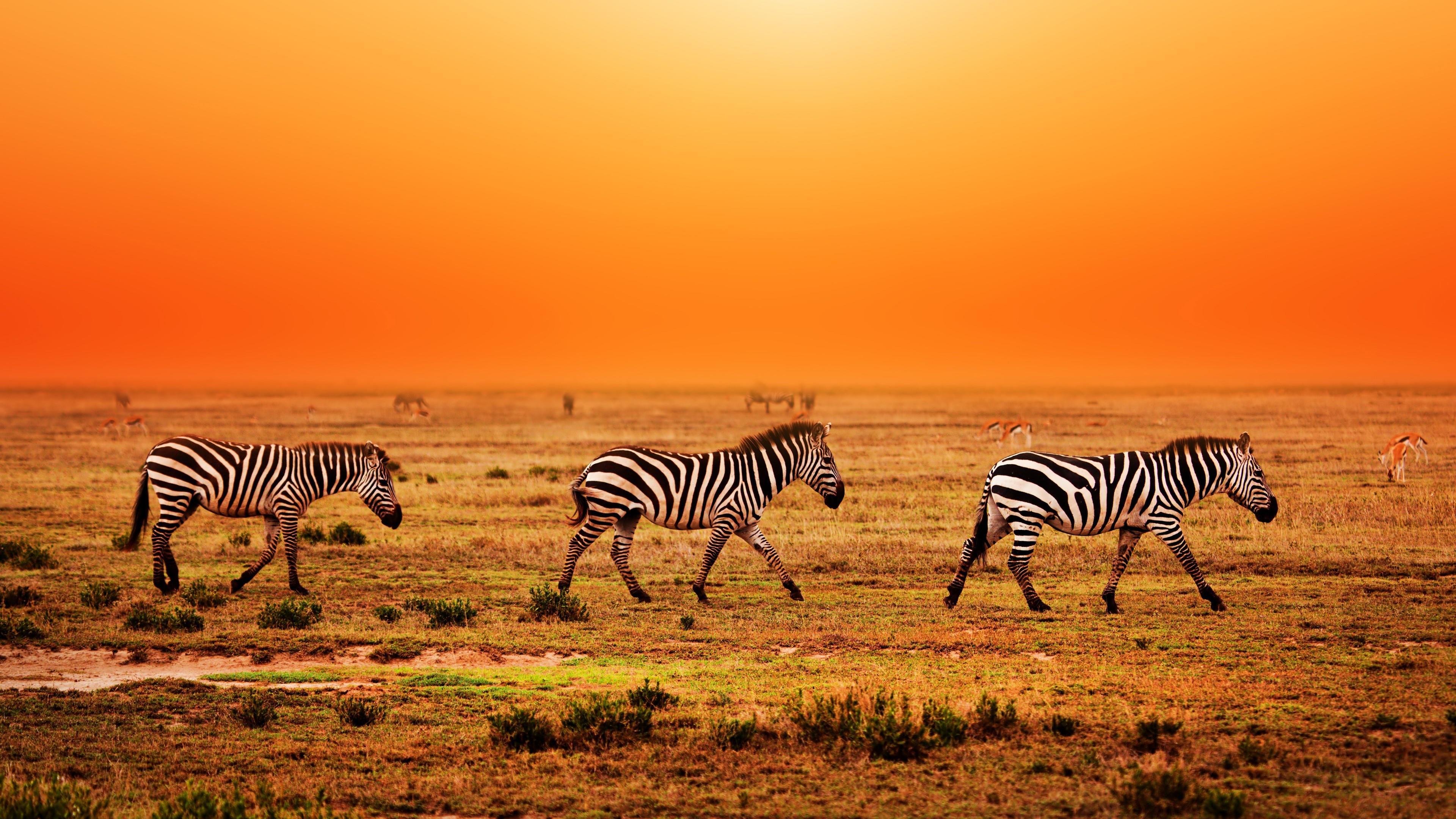 Serengeti National Park migration wallpaper