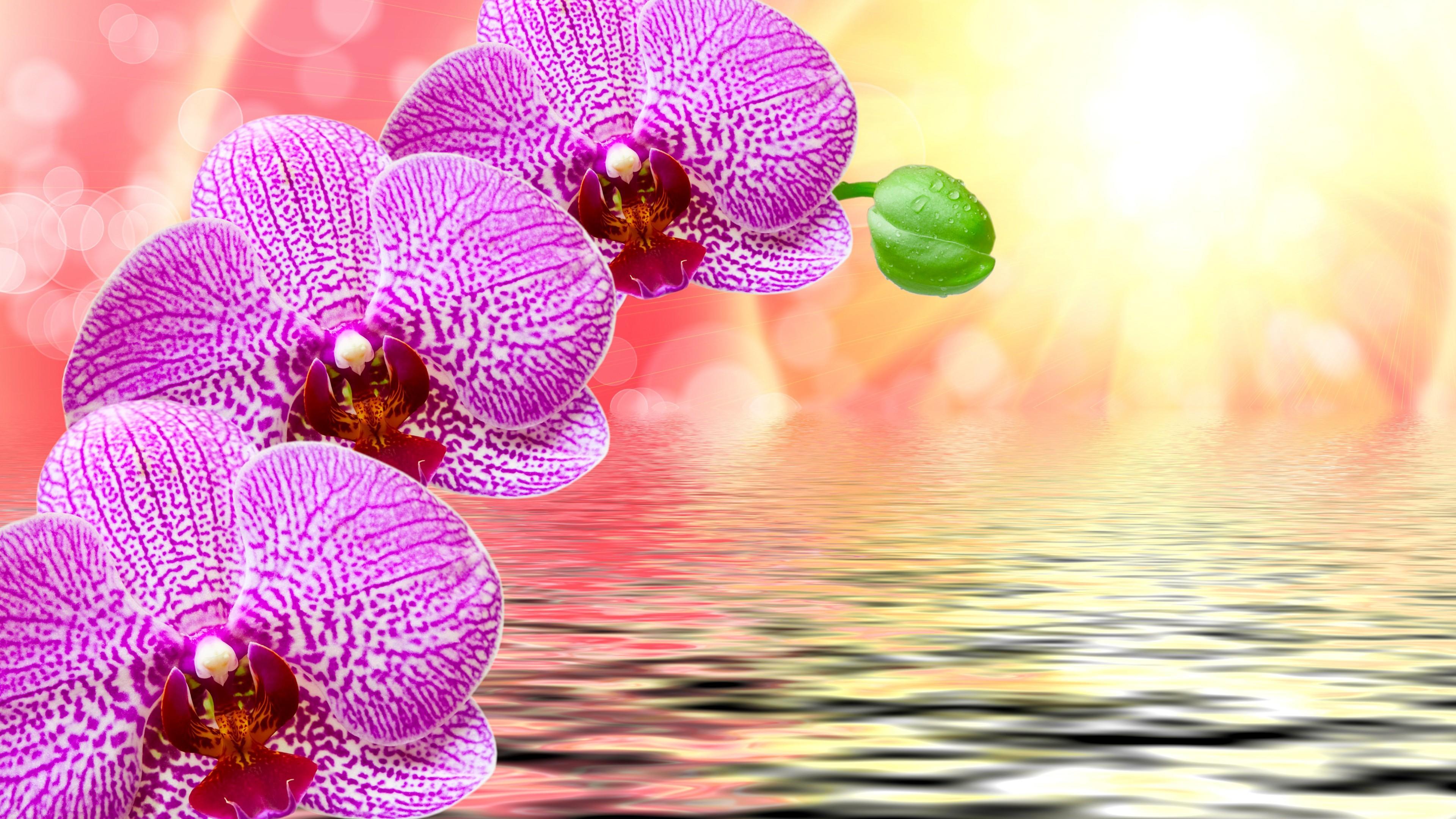 Orchid flower art wallpaper