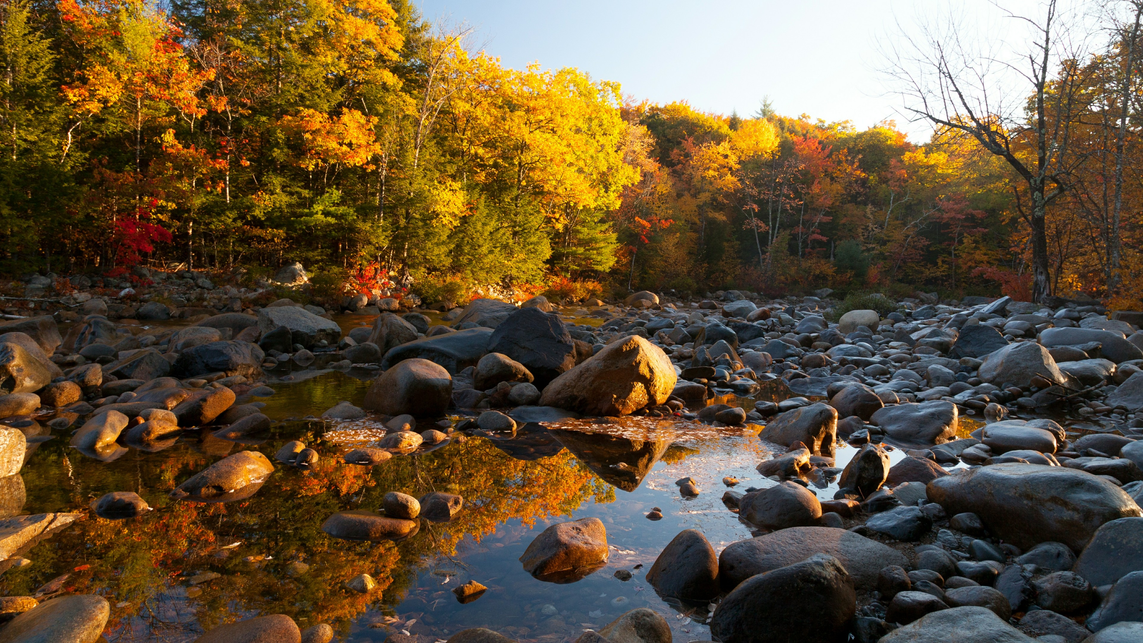 Stony stream bad in the fall forest wallpaper