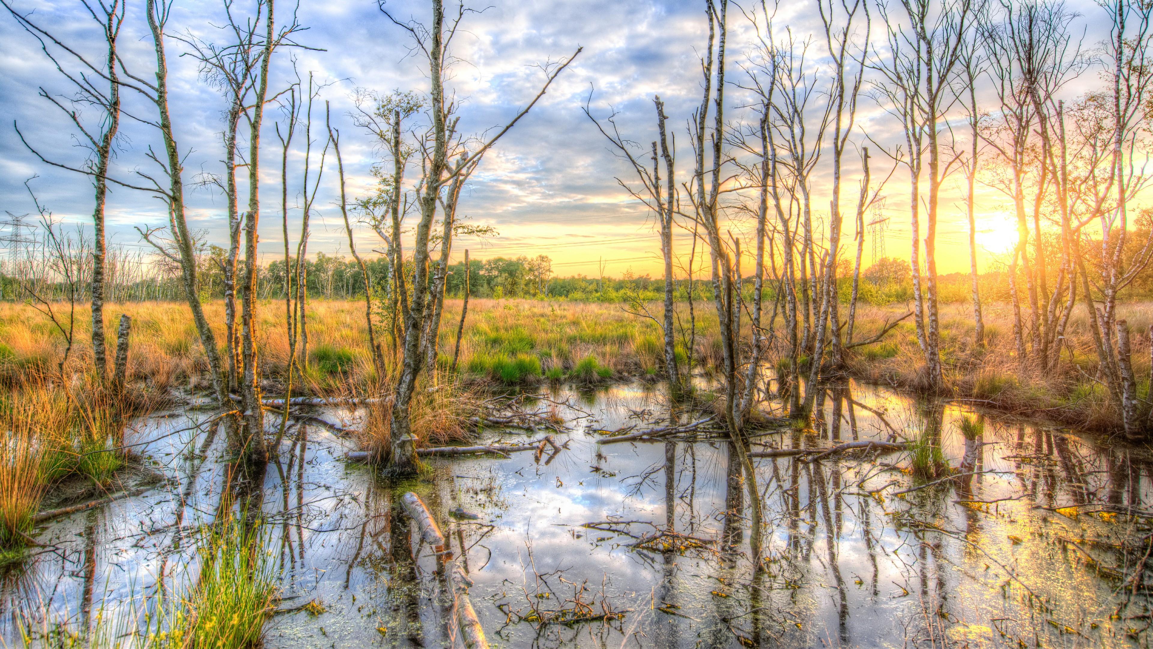 Sunrise reflection in the wetland wallpaper