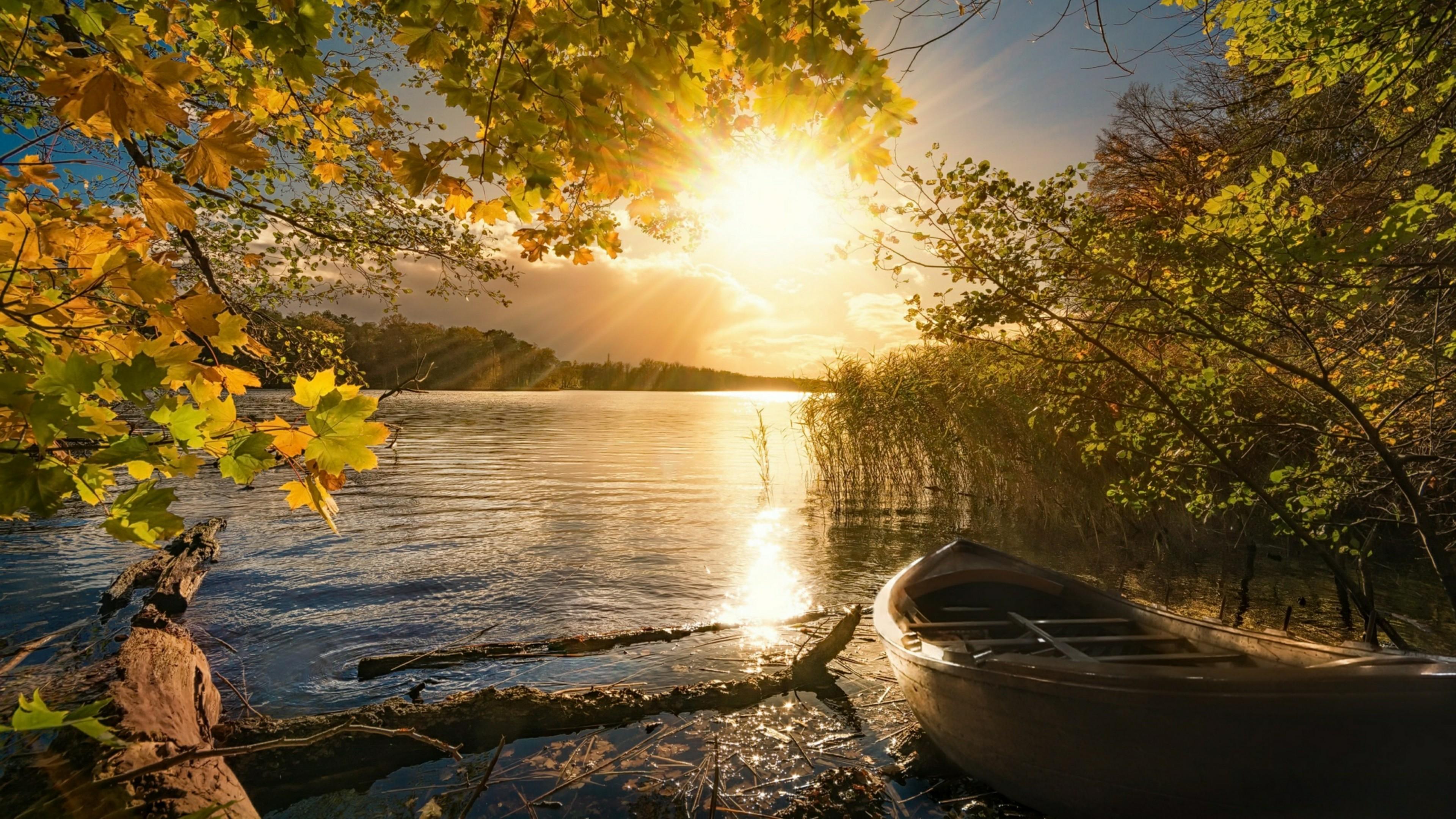 Autumn Sunshine 4K UltraHD Wallpaper