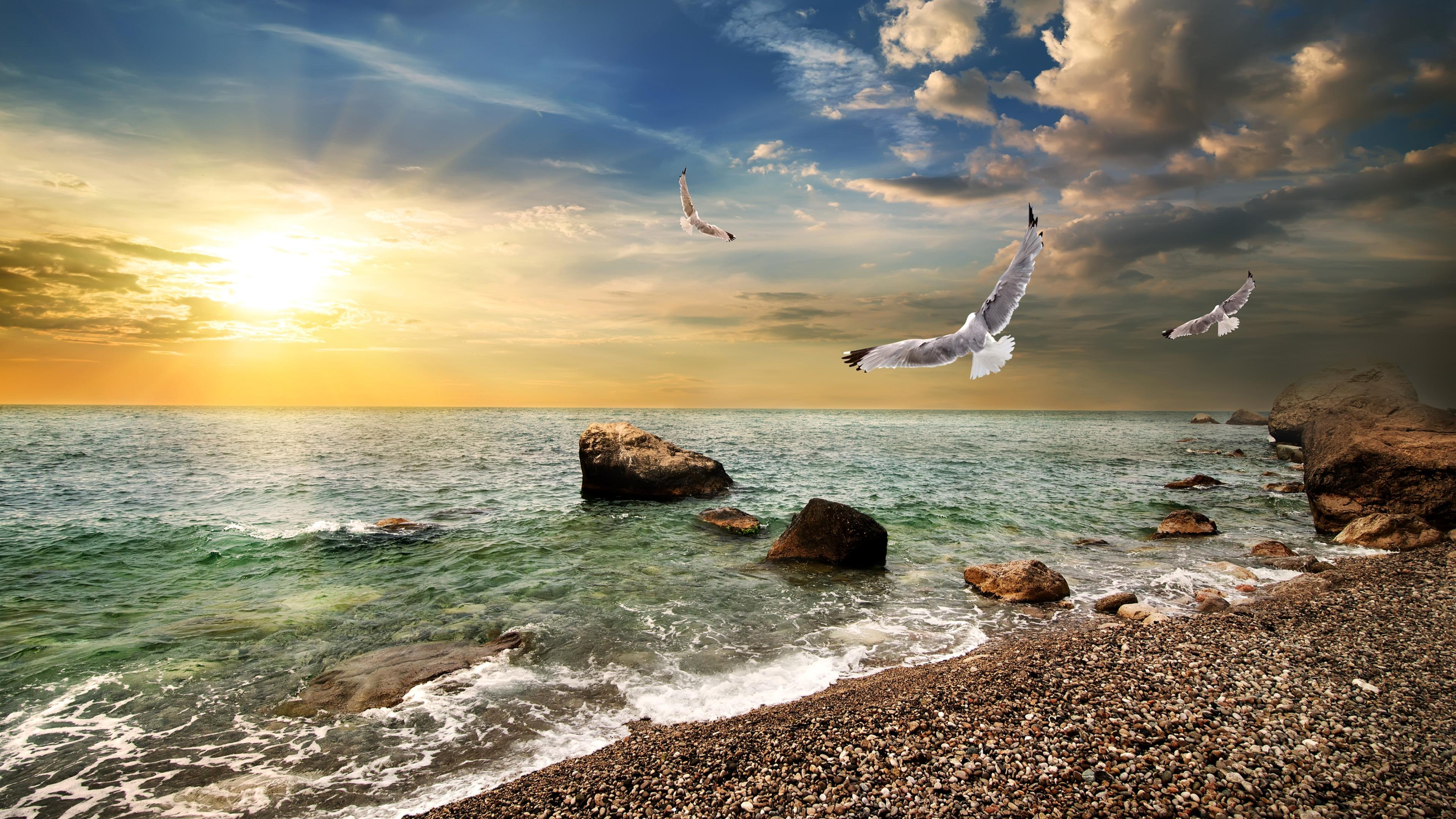 Seagulls over the water in the glowing sunrise wallpaper