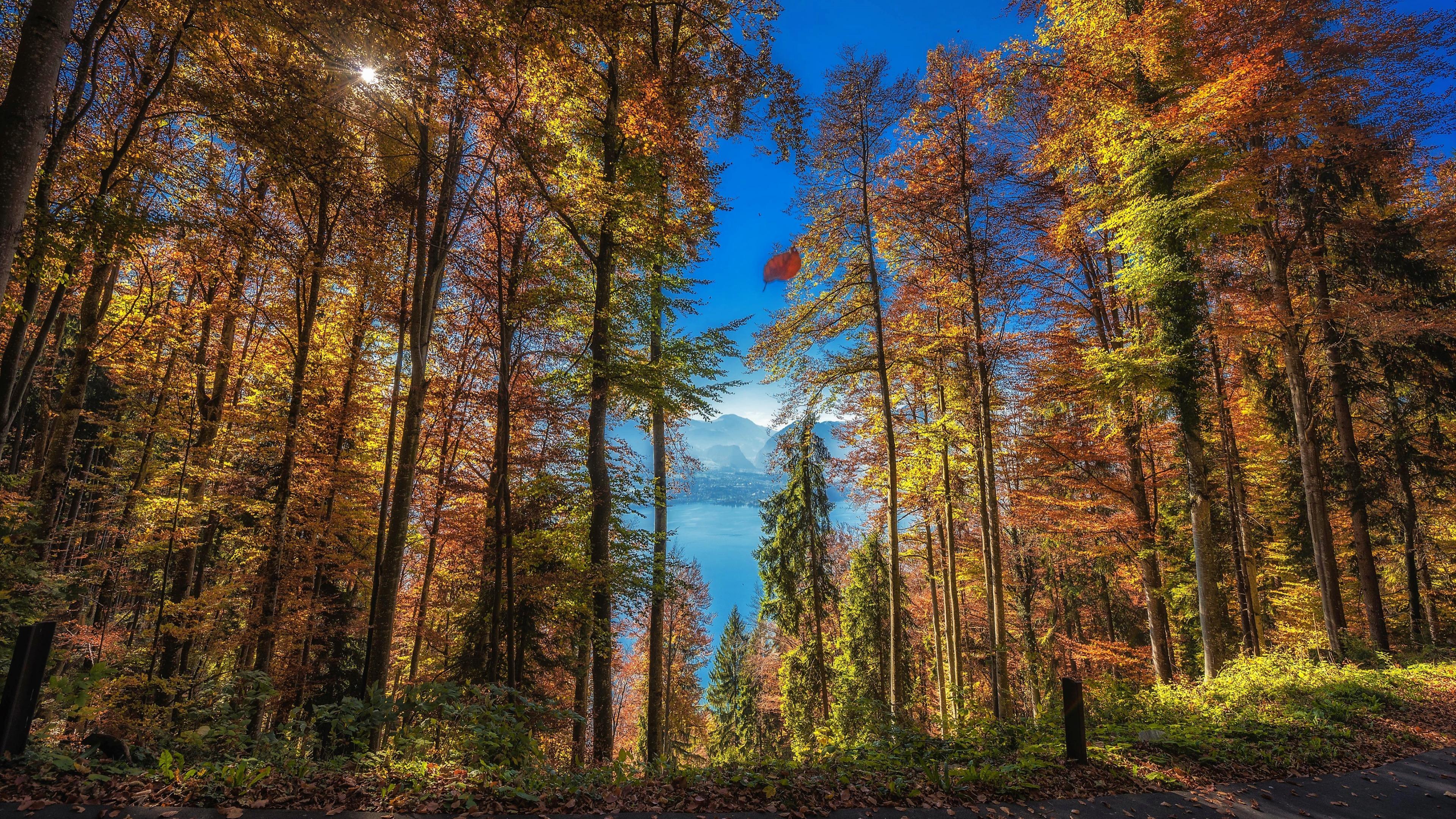 Autumn woods wallpaper