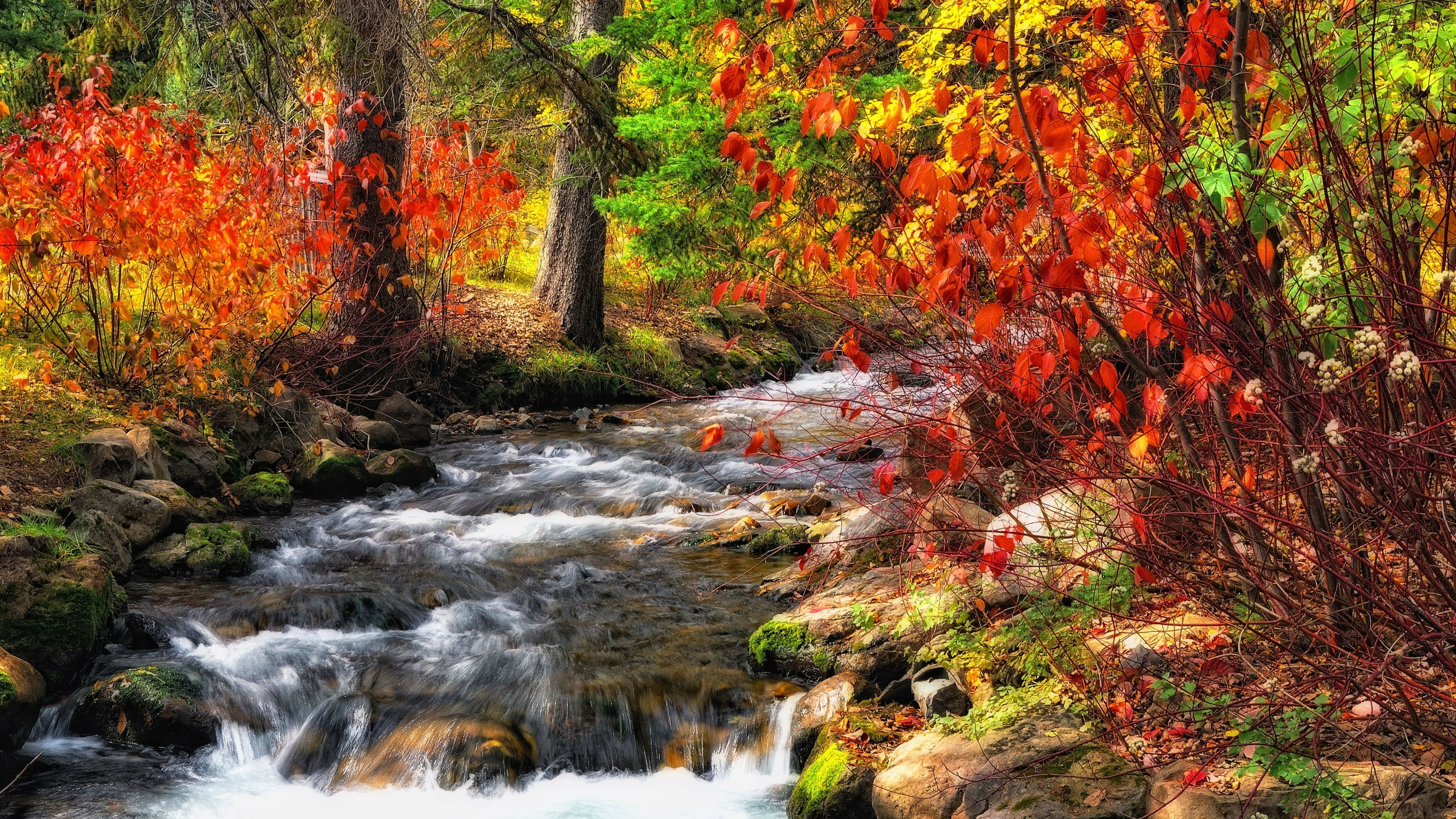 Creek in the colorful fall nature wallpaper