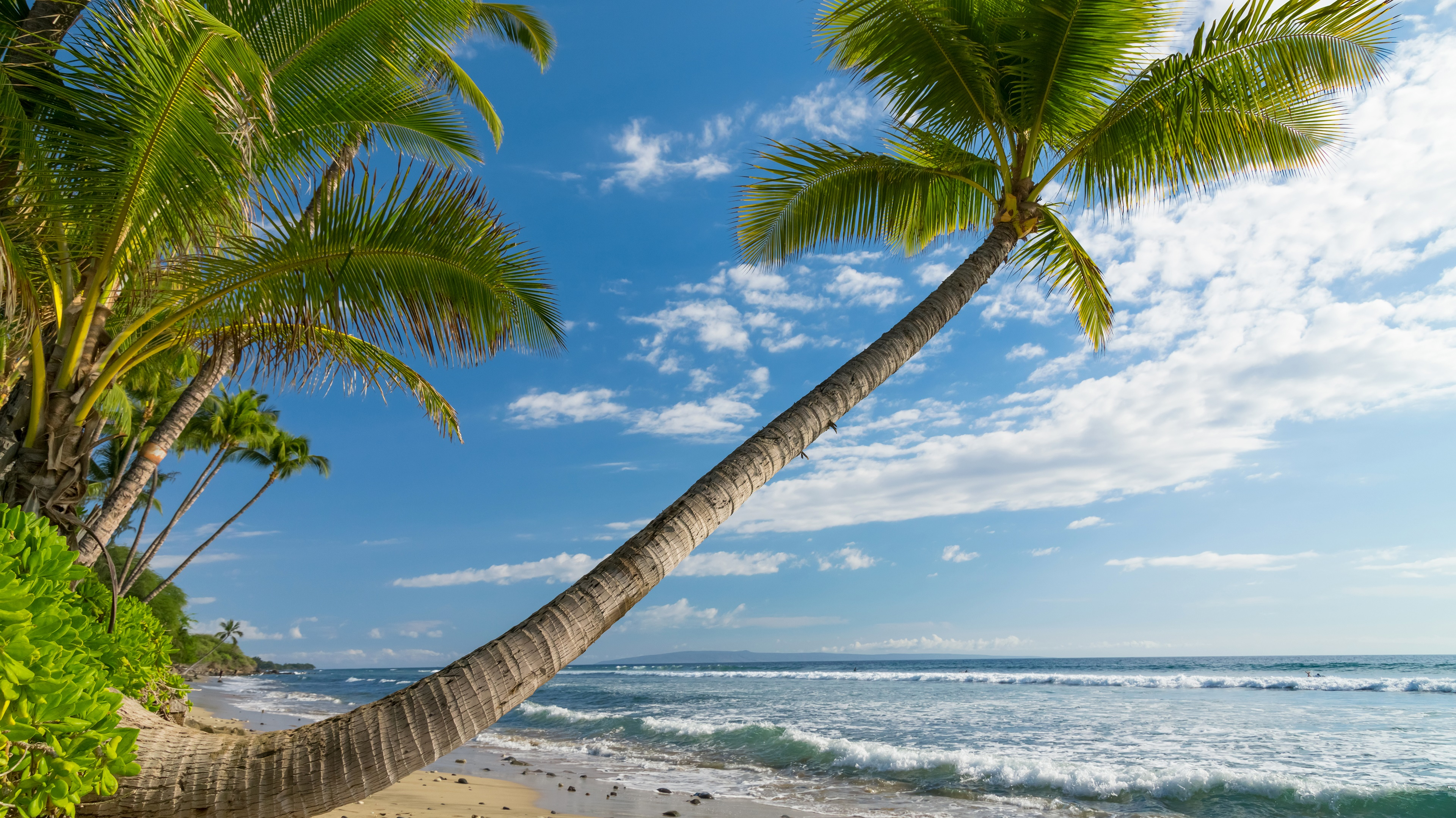 White sandy beach with palms wallpaper
