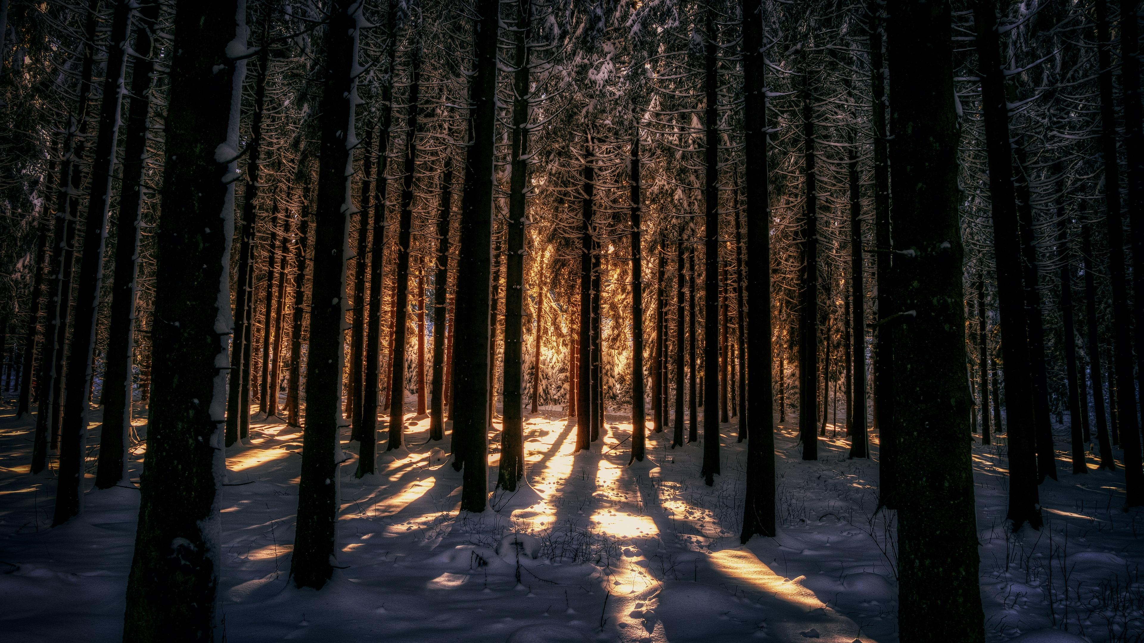 Deep forest in winter season wallpaper