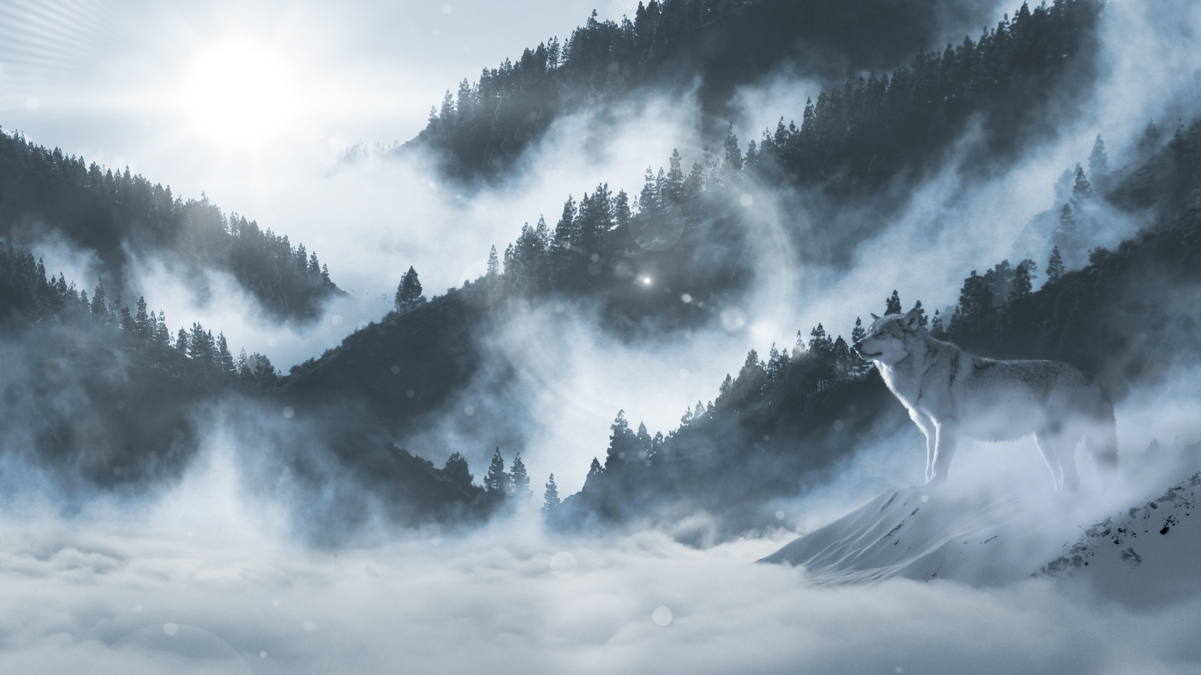 A lone wolf in the foggy mountains wallpaper