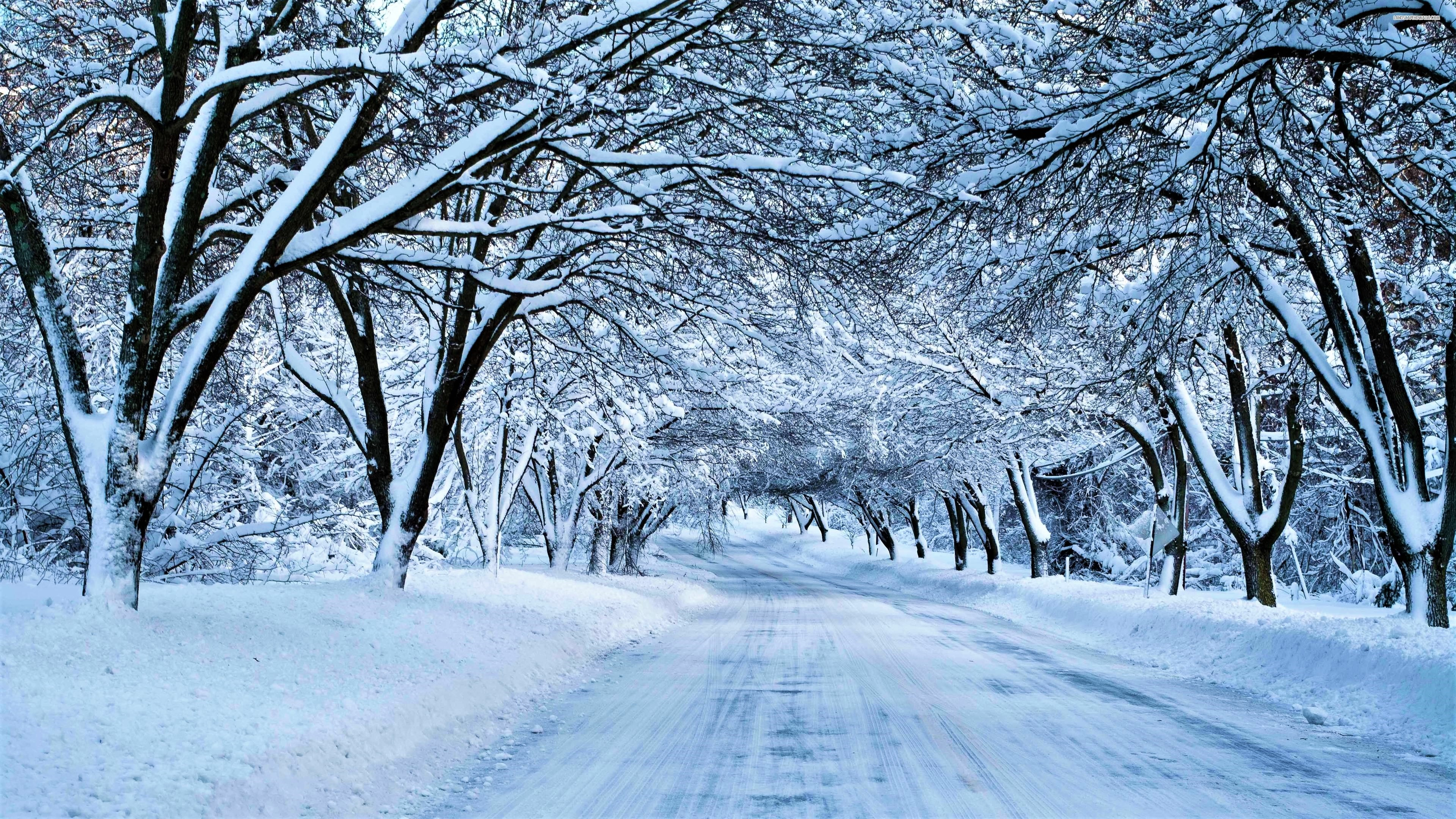 Snowy tree lane wallpaper