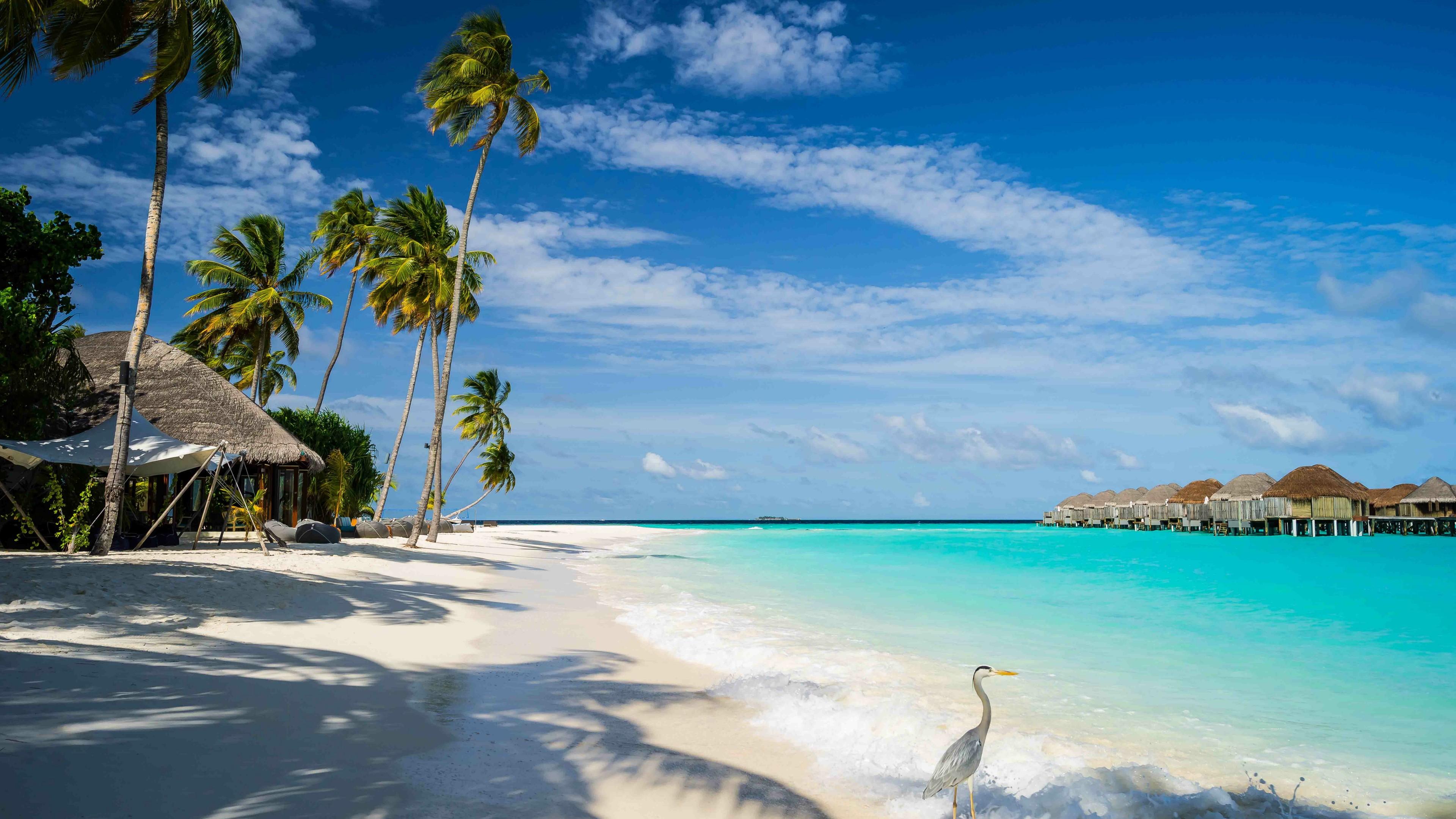 Sandy beach in Maldives wallpaper - backiee