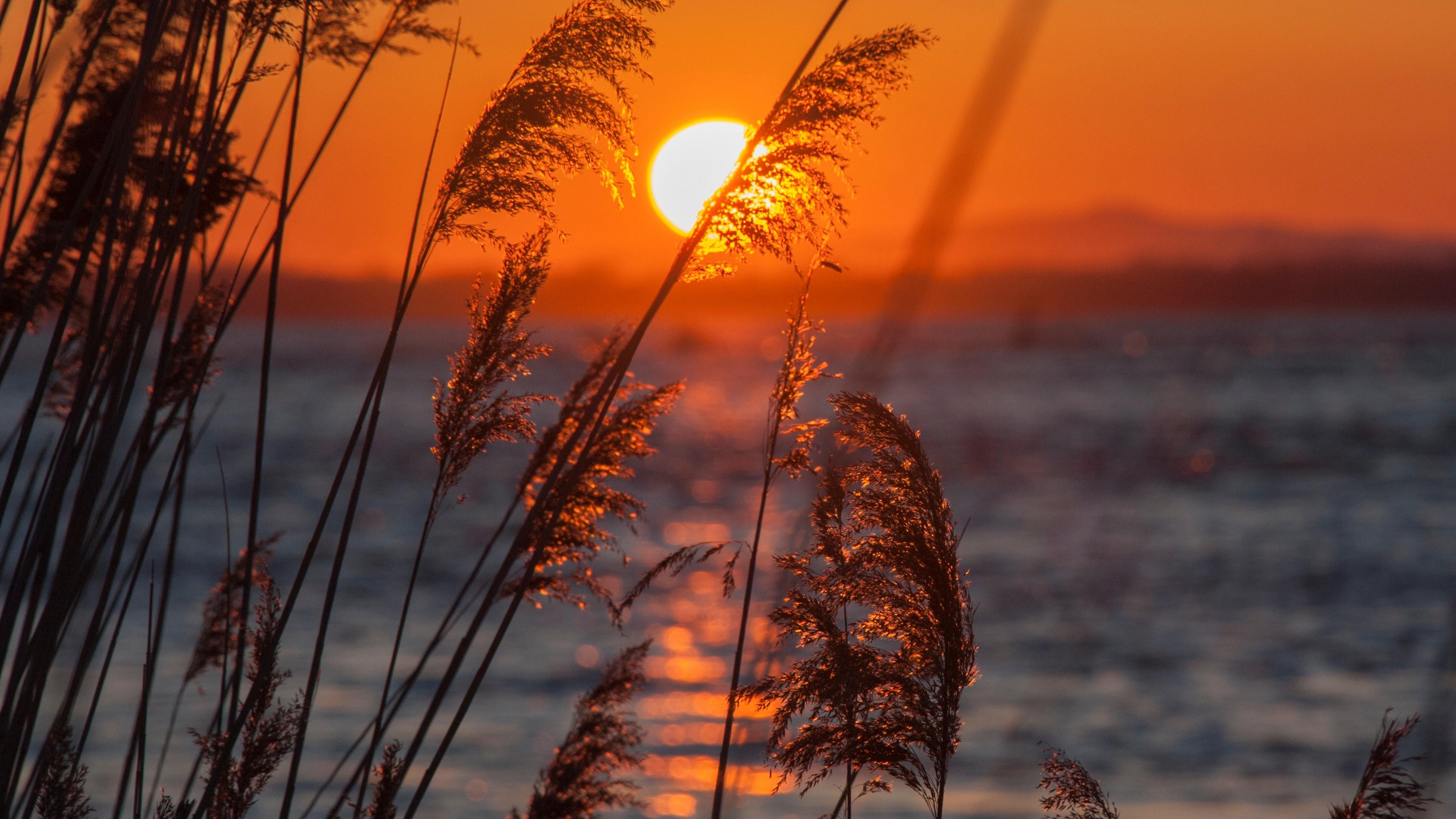 Sunset in reeds wallpaper