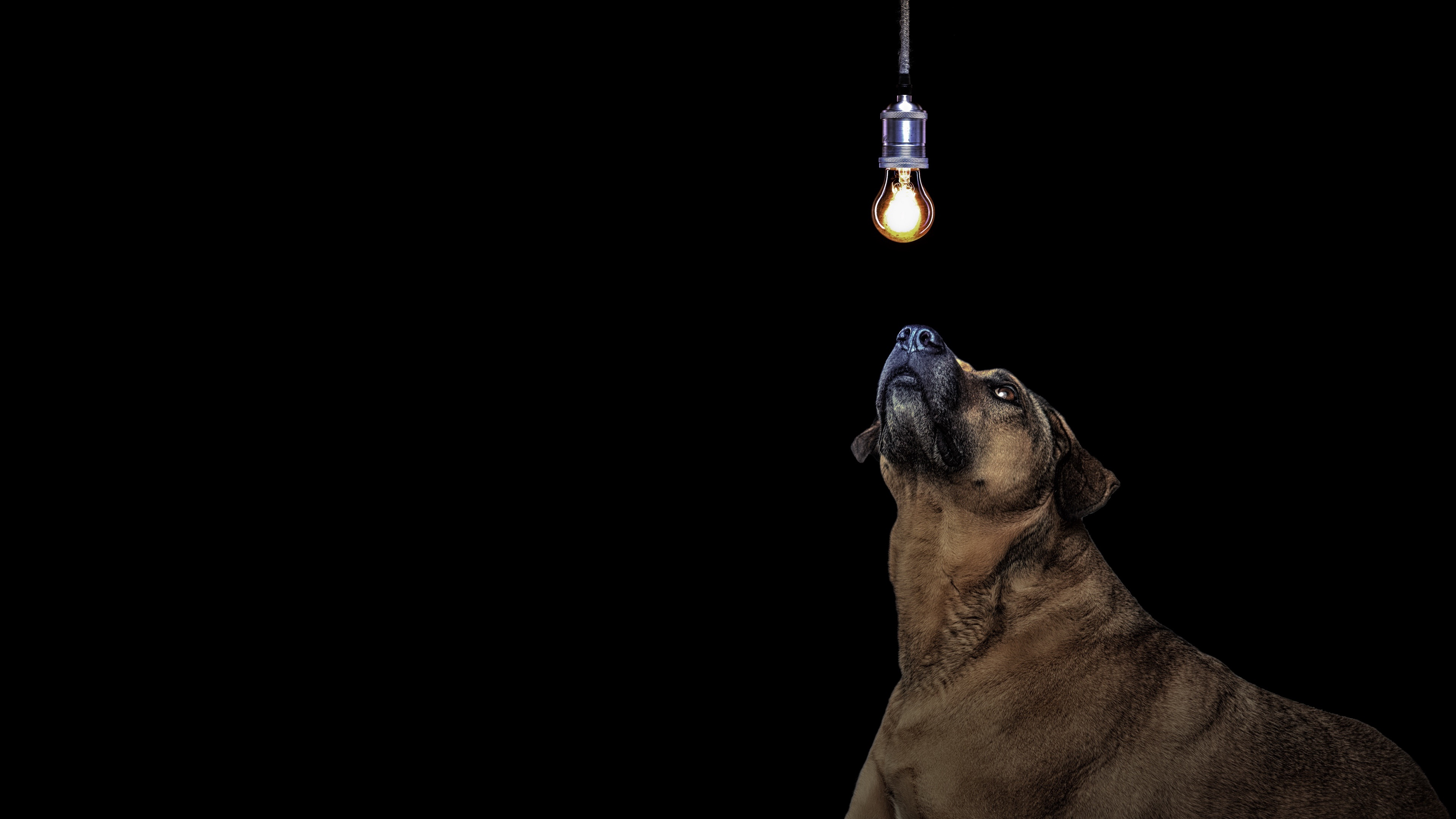 Dog and a bulb wallpaper