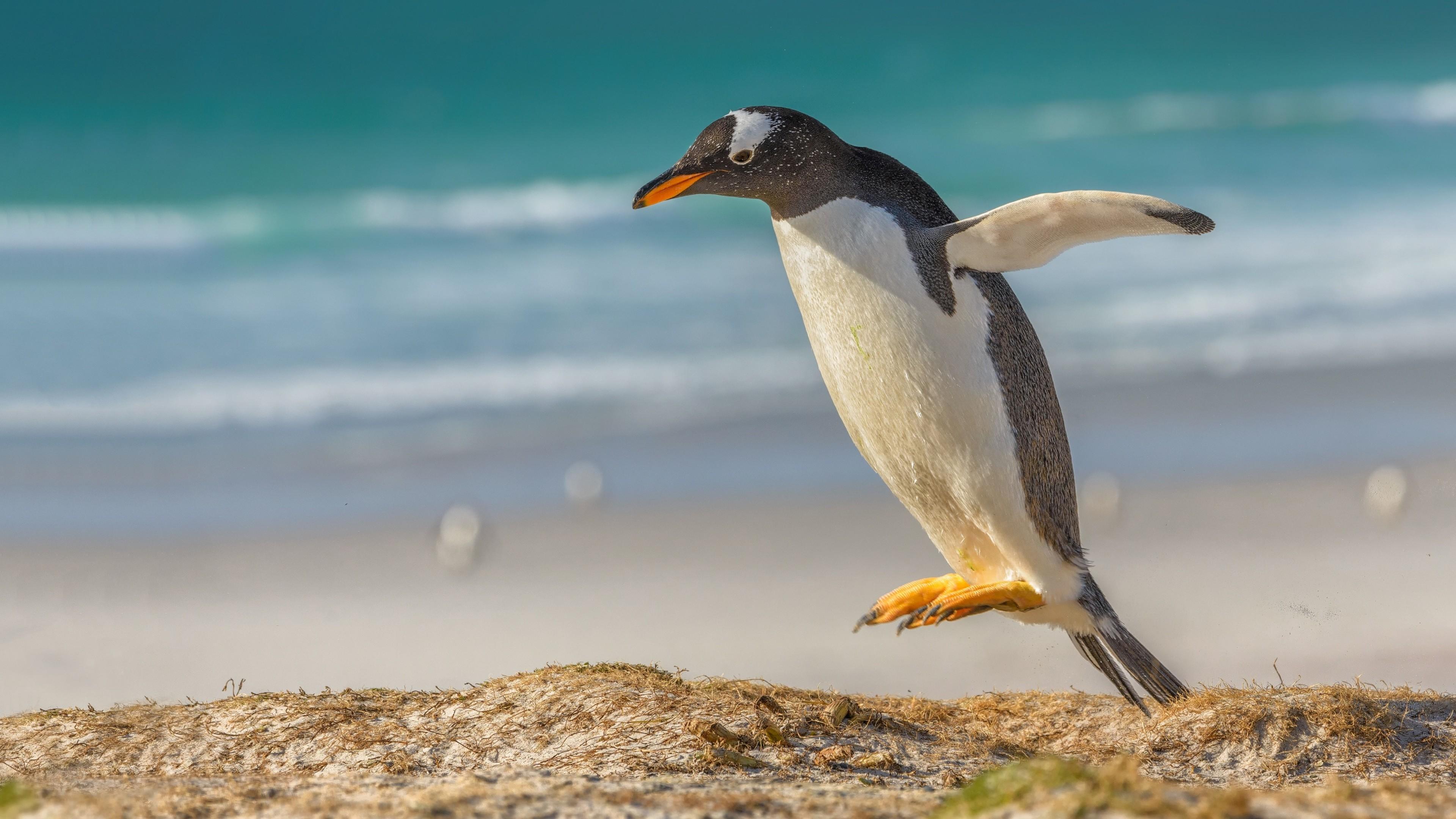 Jumping Penguin wallpaper
