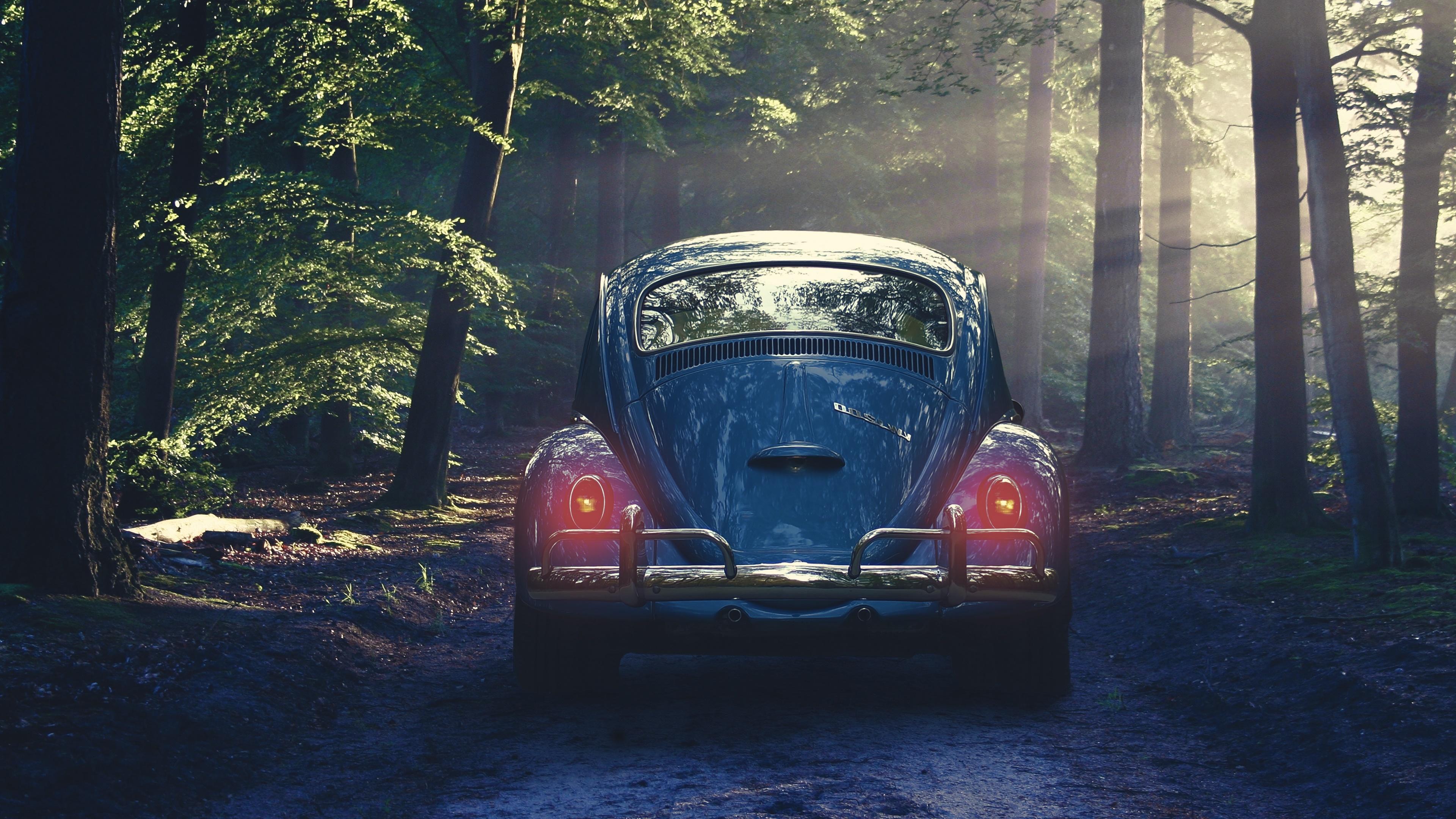 Volkswagen Beetle In The Forest 4k Ultrahd Wallpaper Backiee
