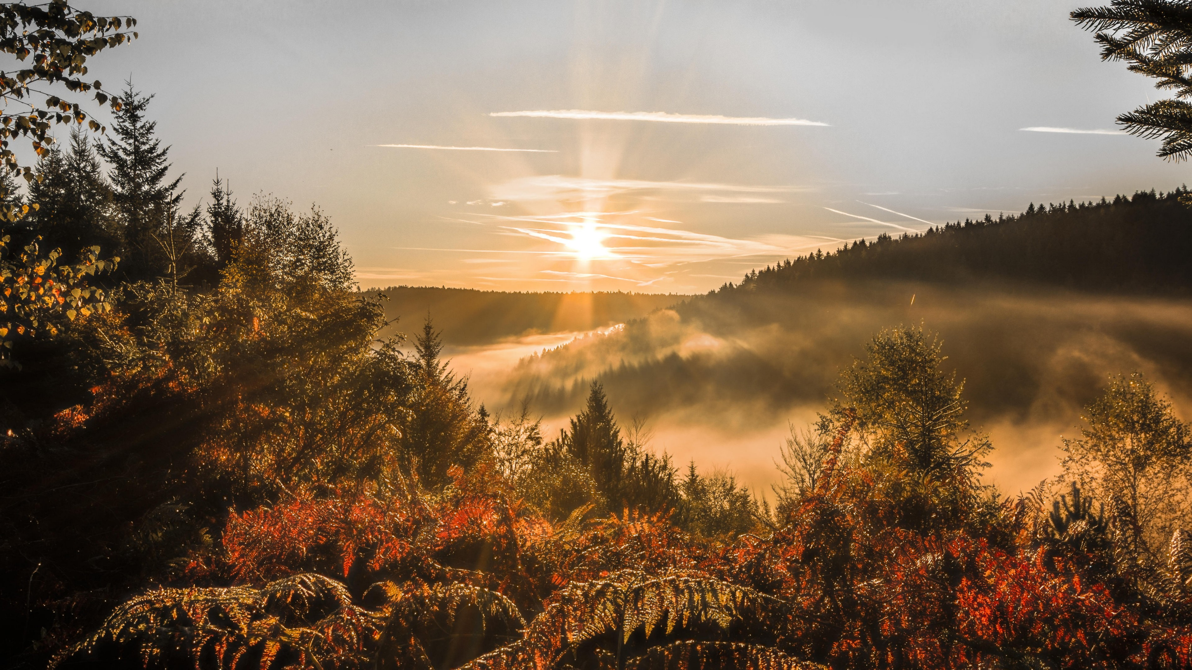 Misty nature at fall wallpaper