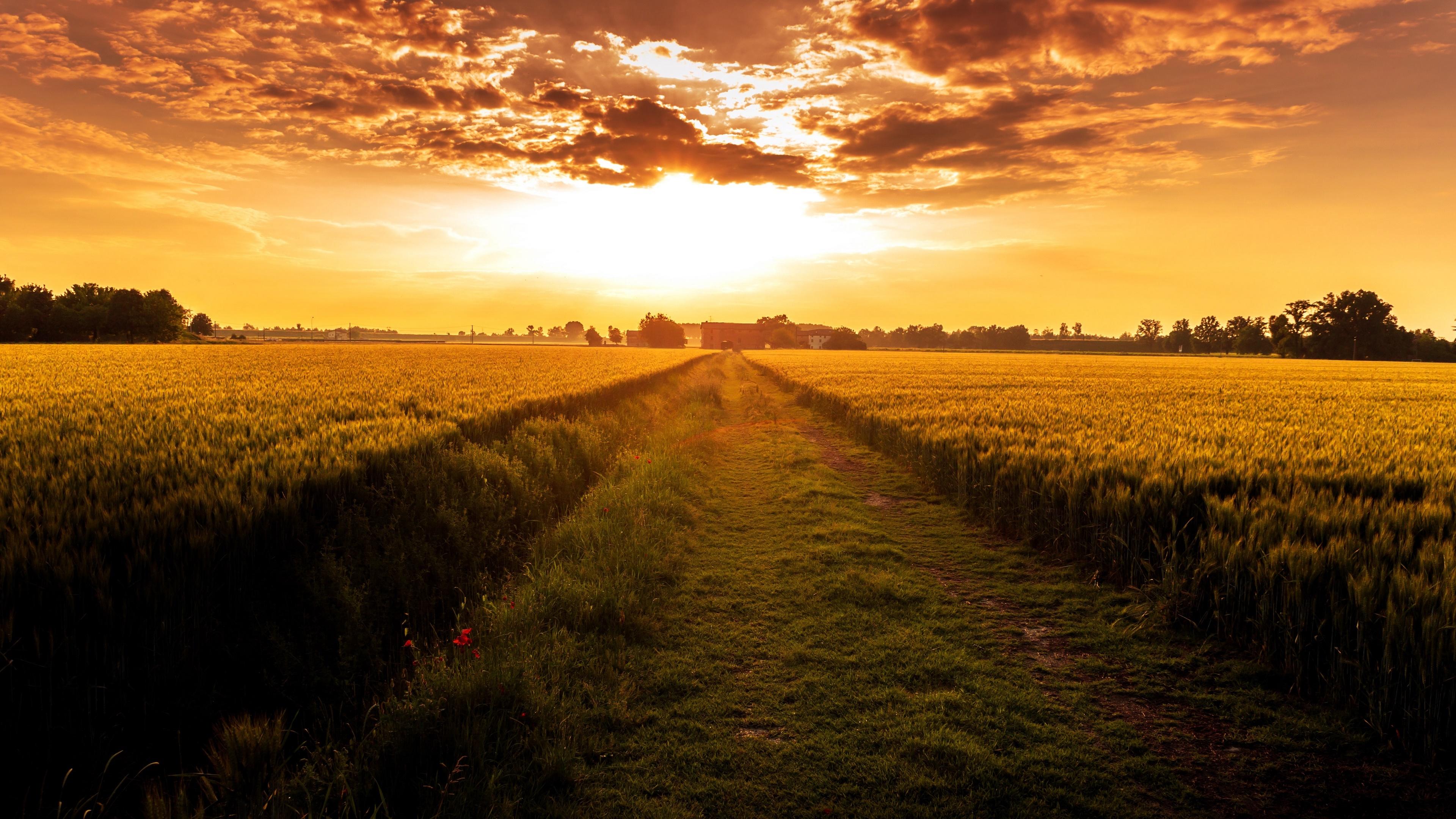 Sunset over the crop field wallpaper