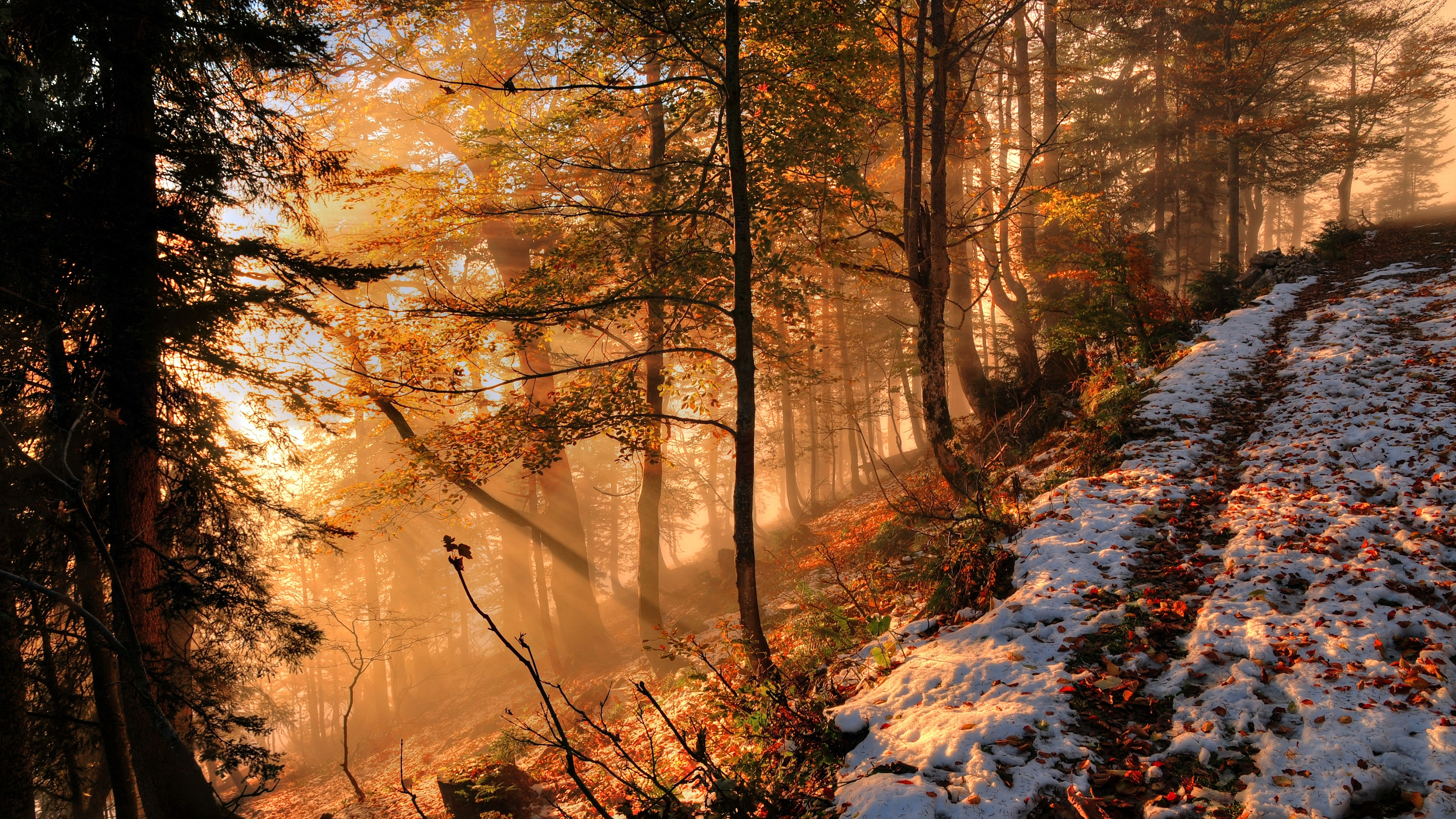 Early snow in the forest wallpaper