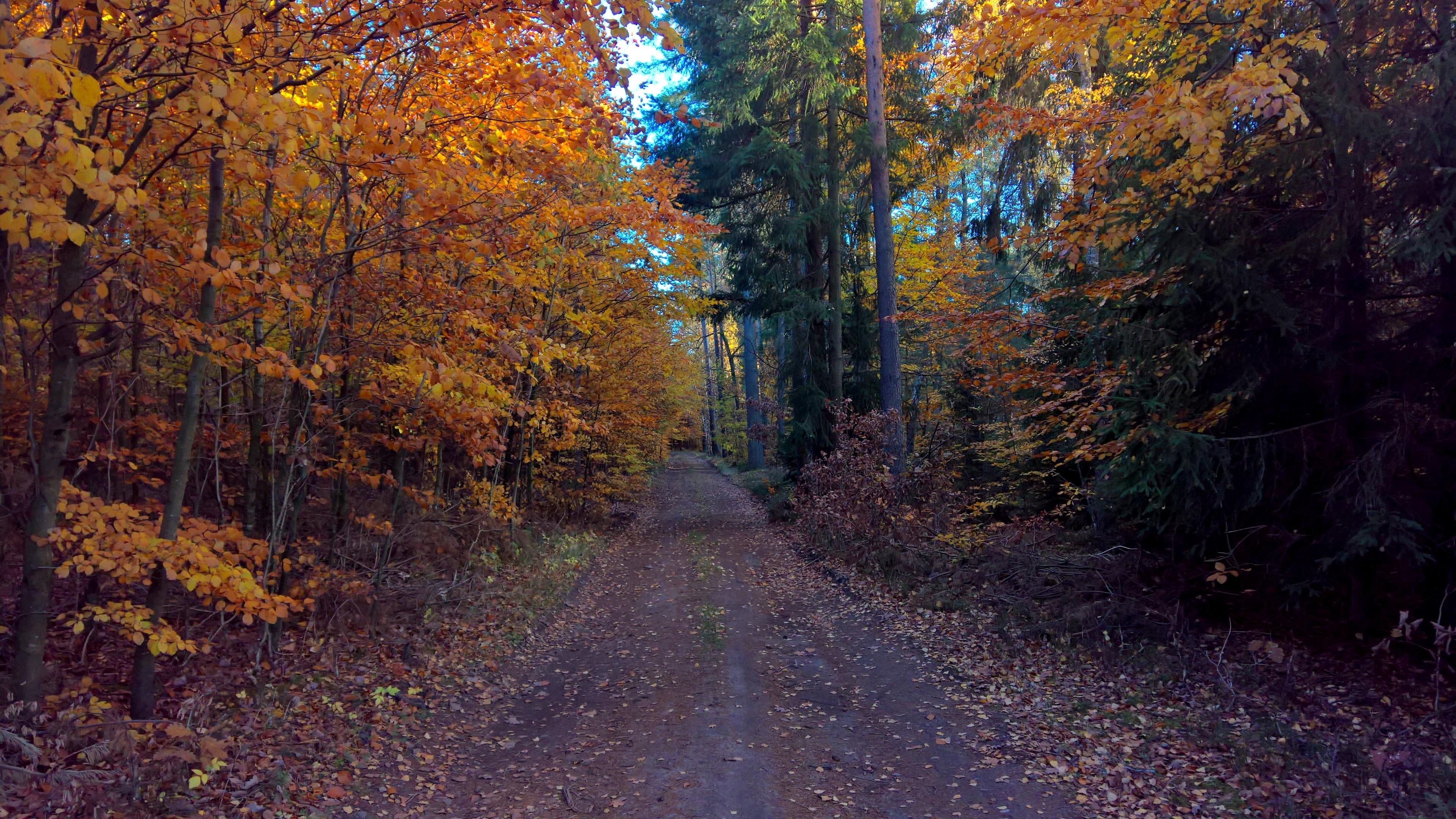 Dirt road in the fall forest wallpaper