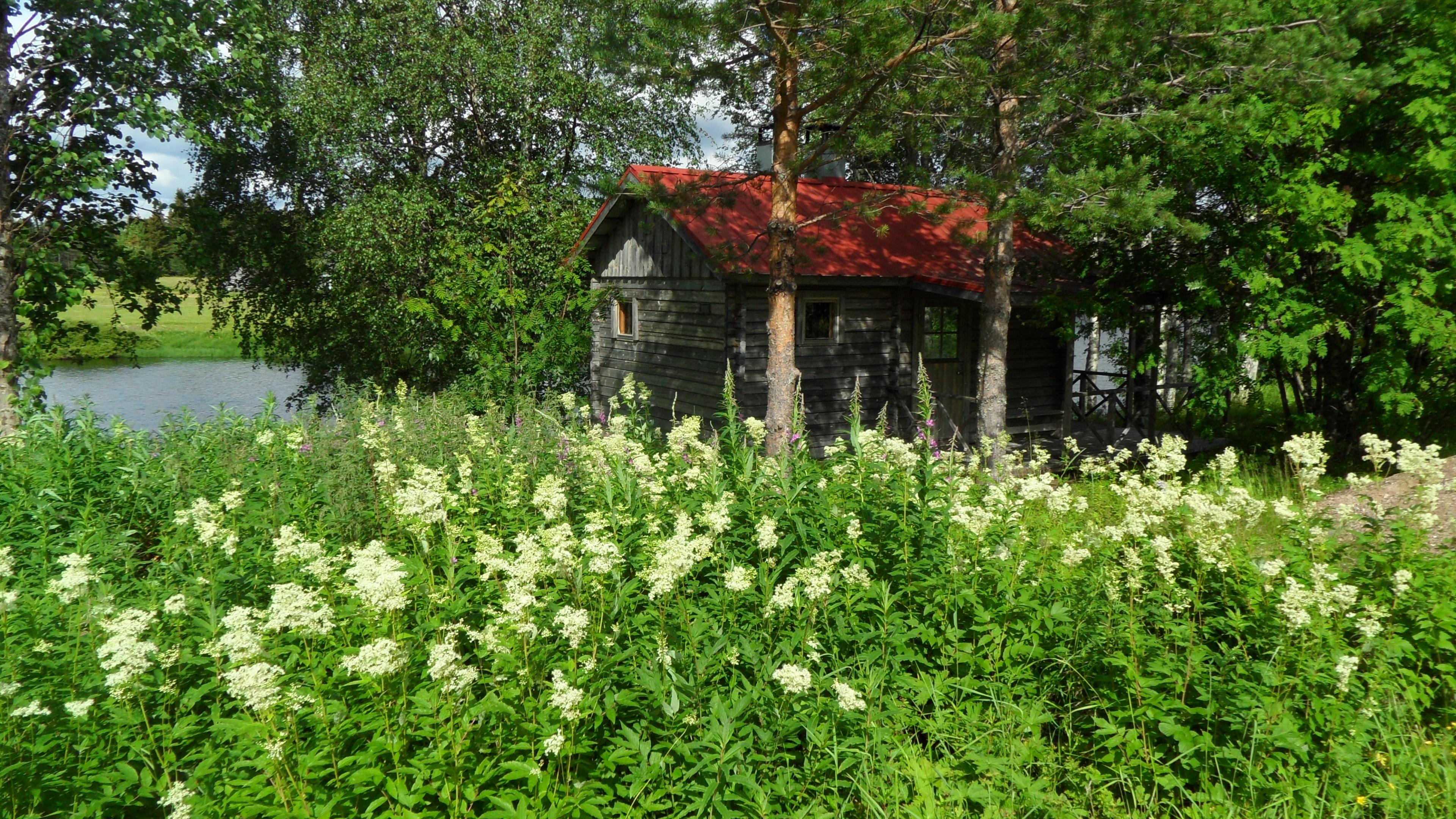 Hut under the trees wallpaper