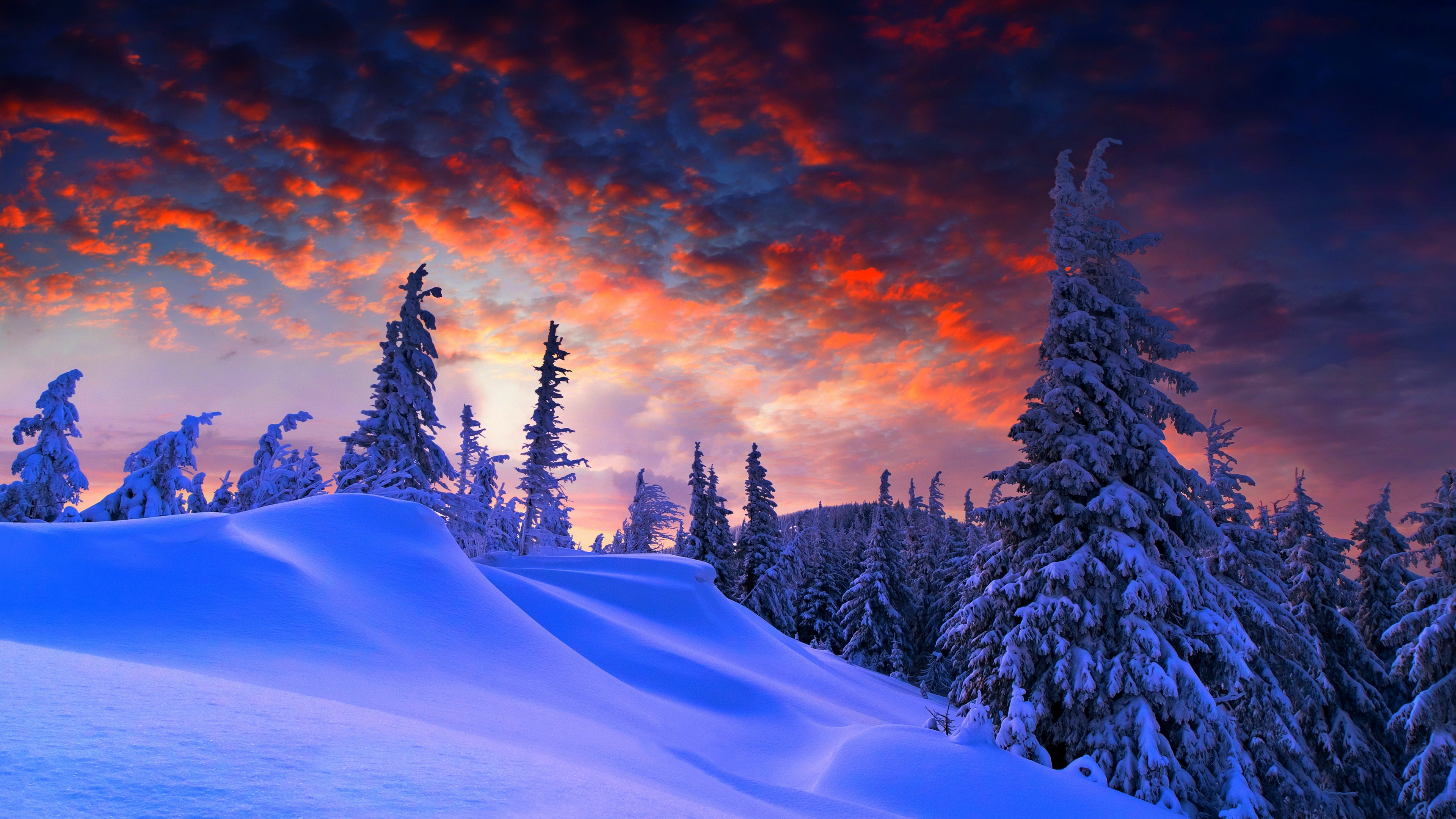 Snowy pine trees at sunset wallpaper