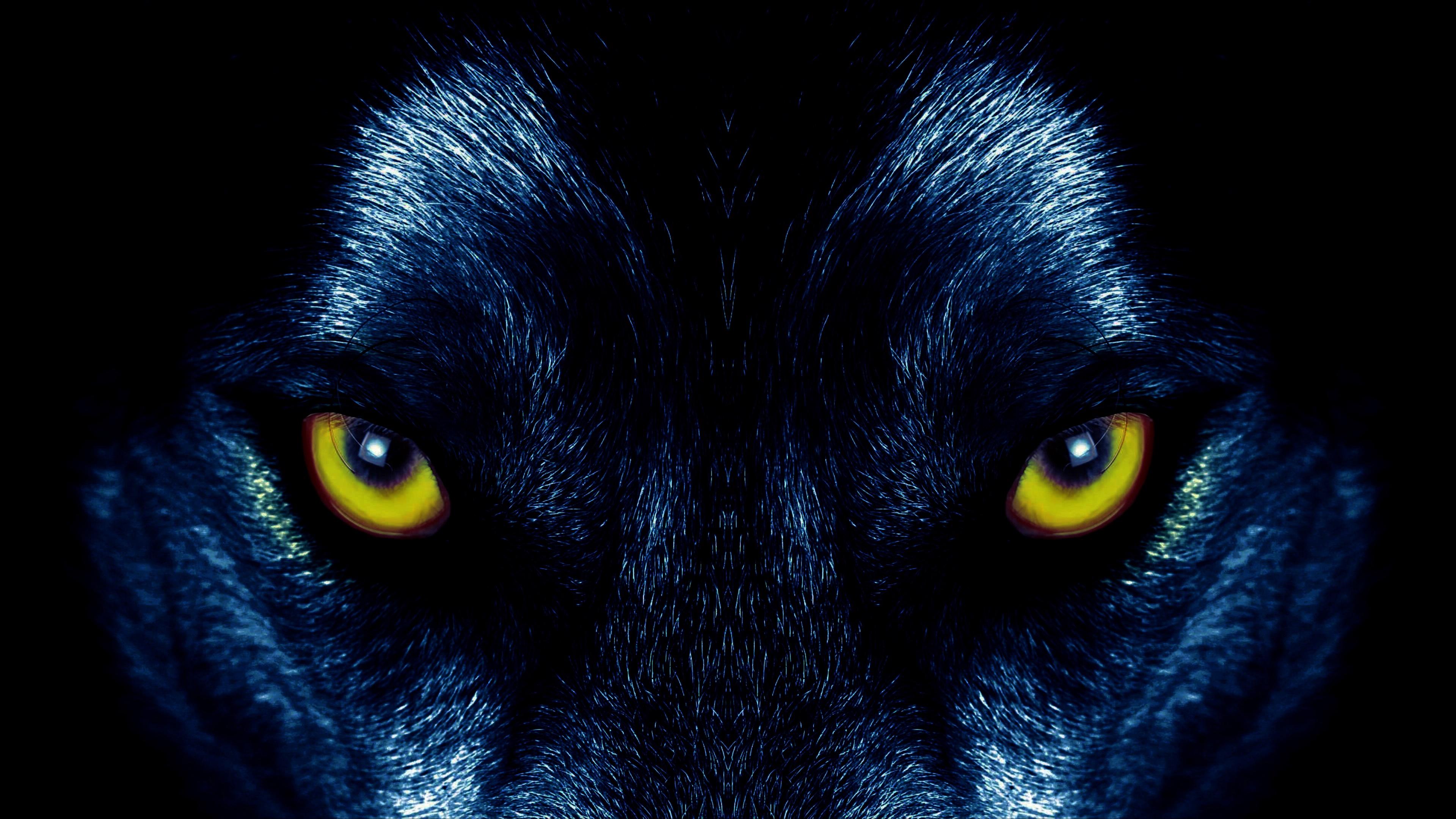 Wolf eyes wallpaper
