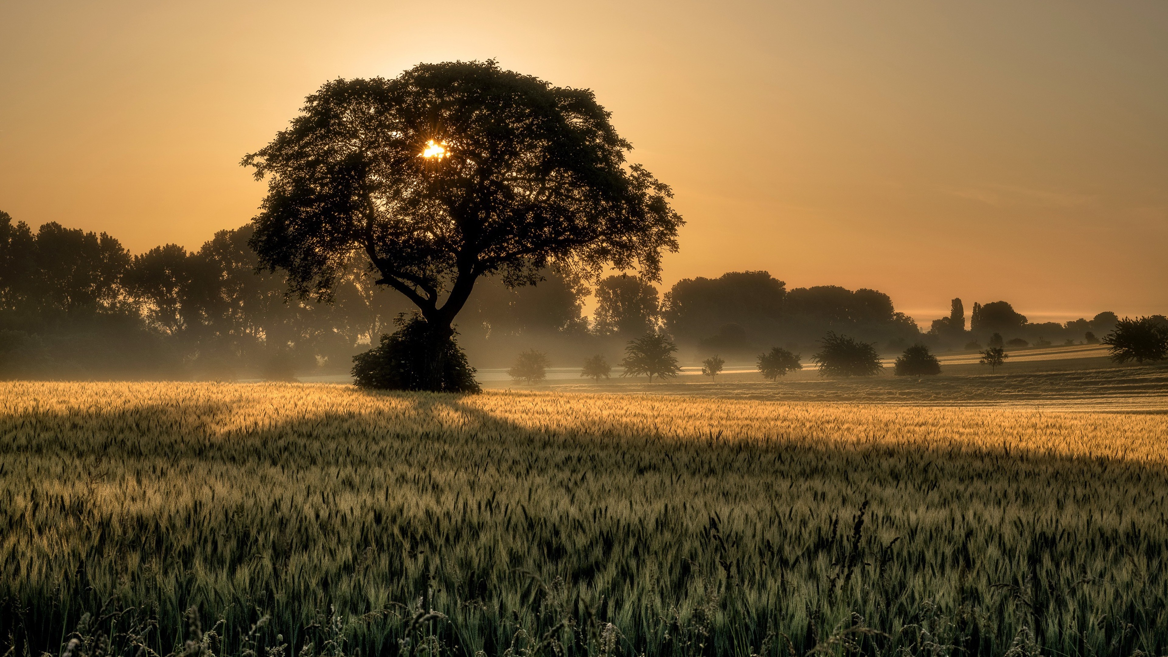Solitary tree at sunset wallpaper