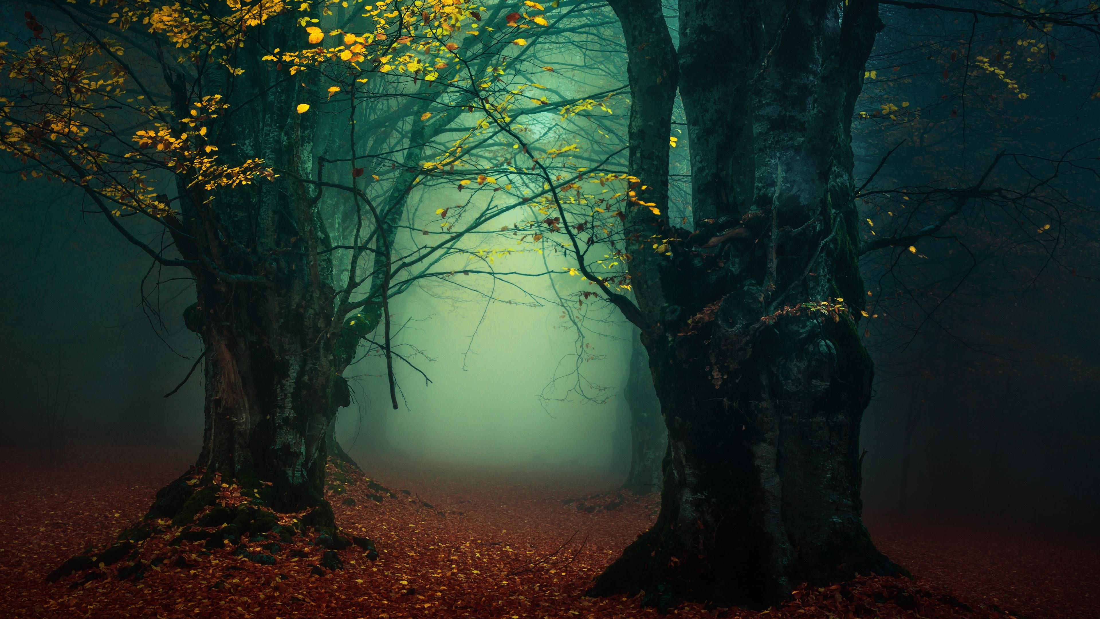 Misty forest lane wallpaper