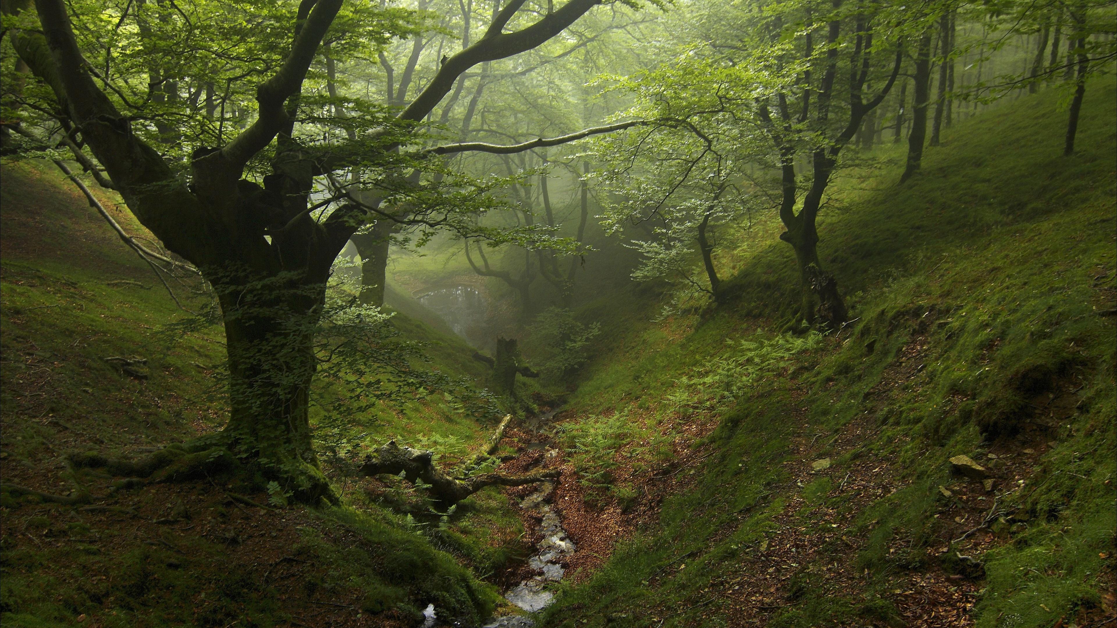 Green forest creek wallpaper