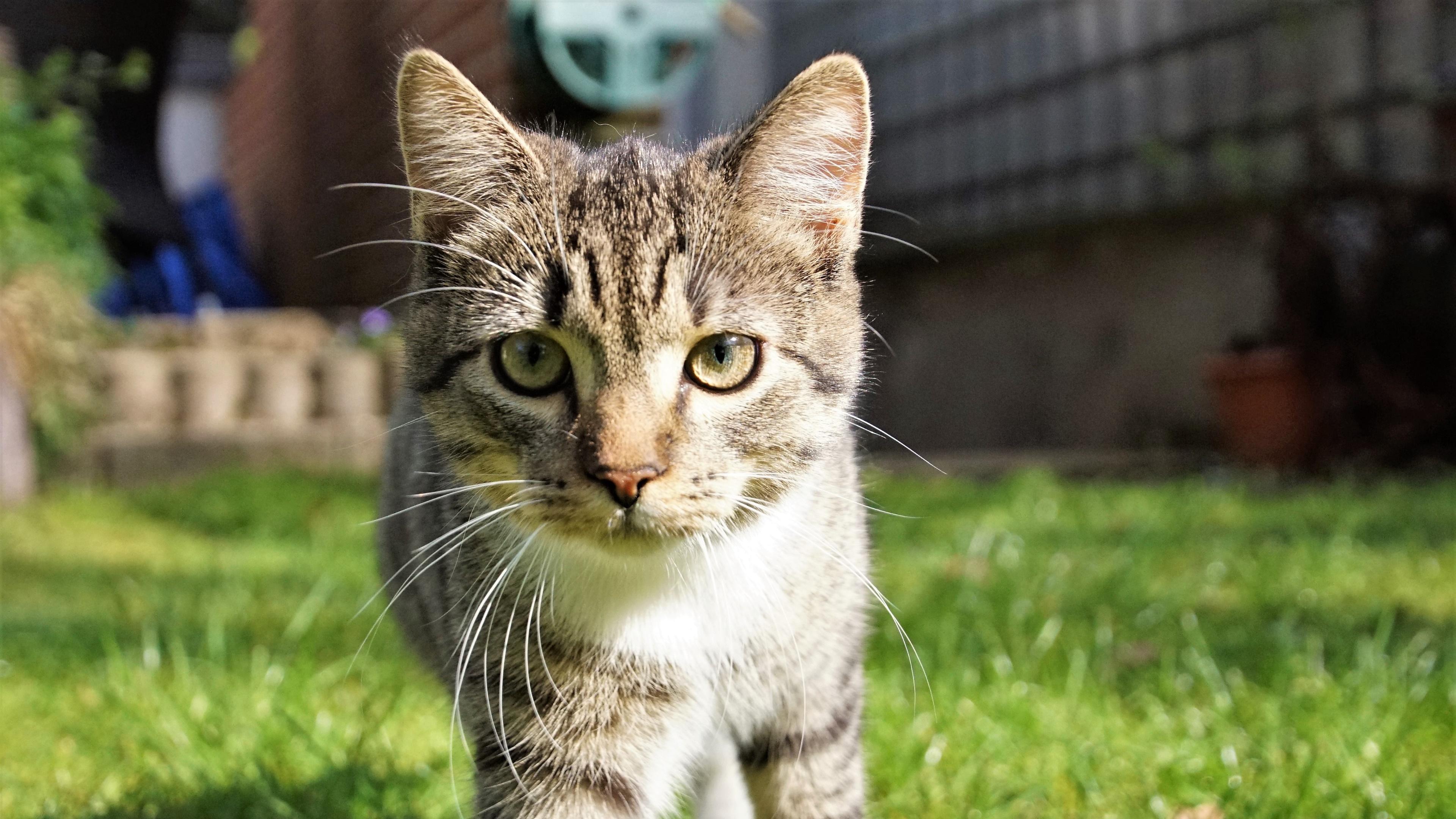 Cat in the garden wallpaper