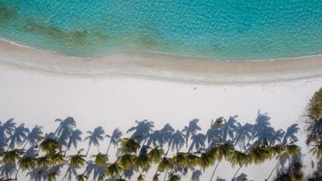 Palm trees on the beach from above wallpaper