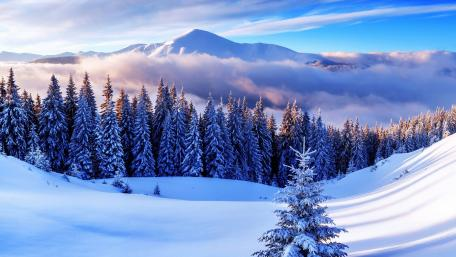 Snow Morning🤍 wallpaper