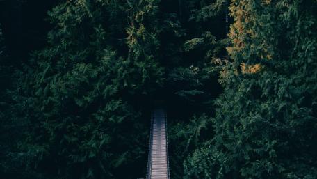 Bridge entering to a heaven  wallpaper