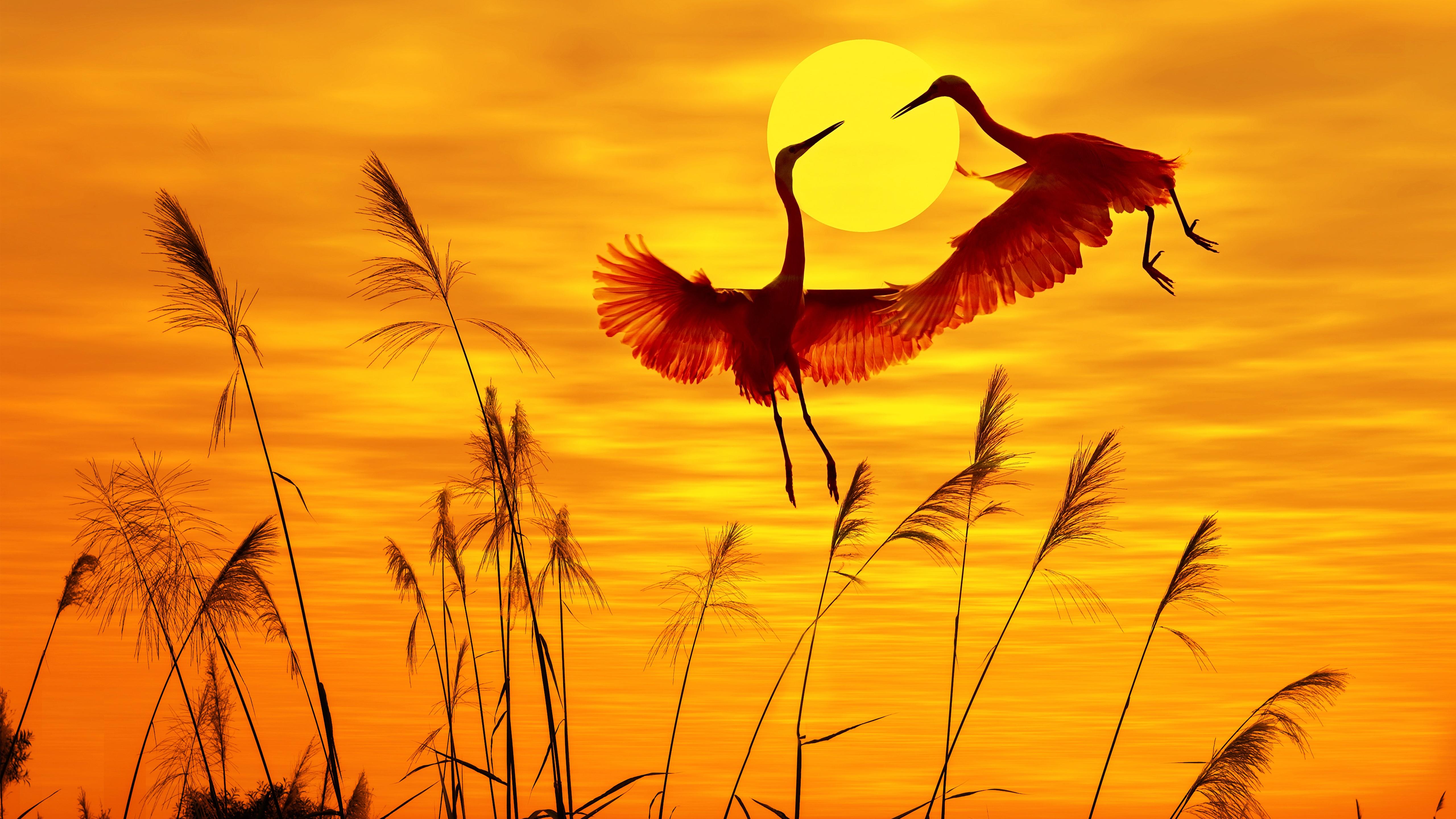 Birds in sunrise wallpaper