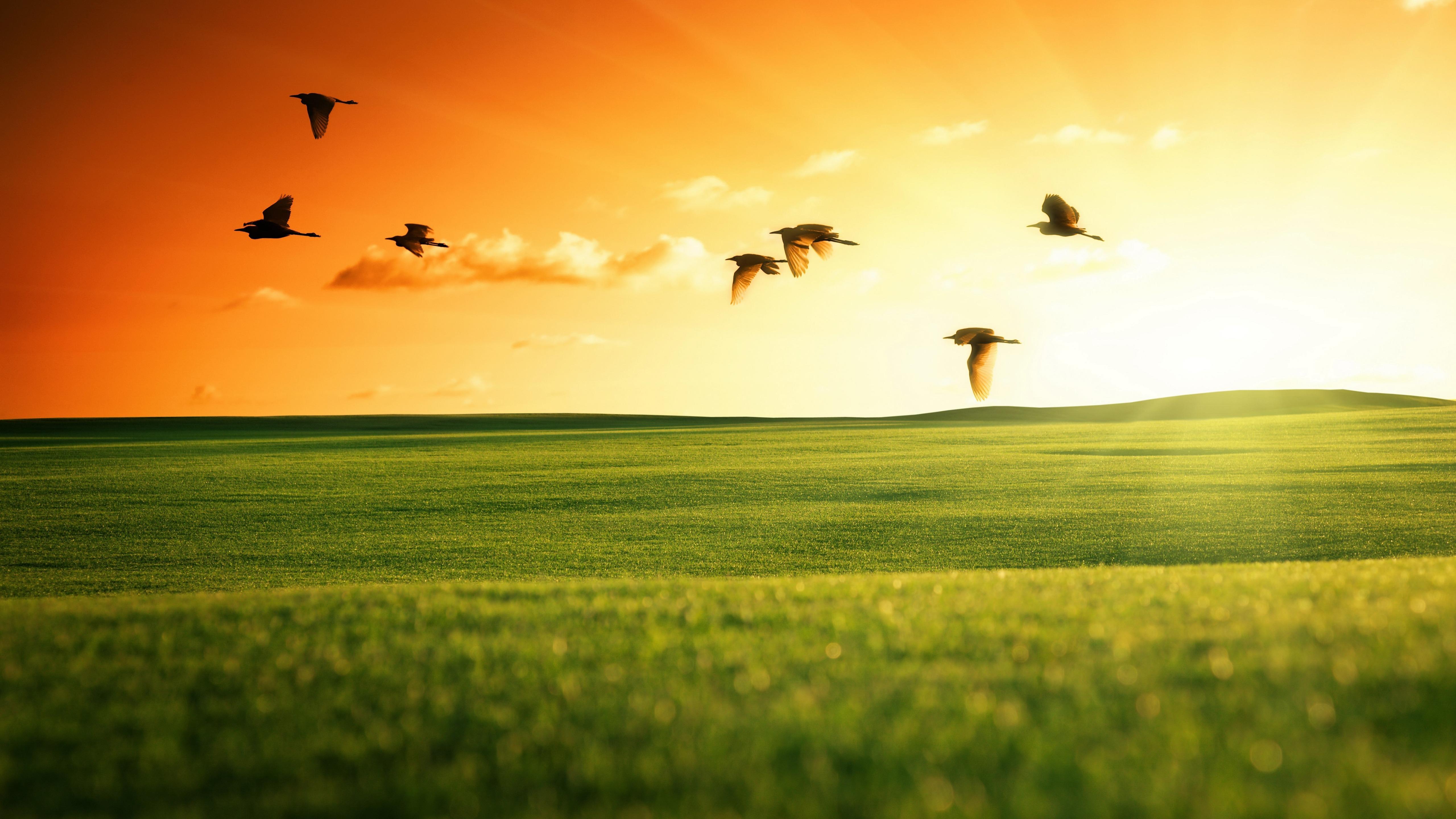 Flying Birds in the field wallpaper