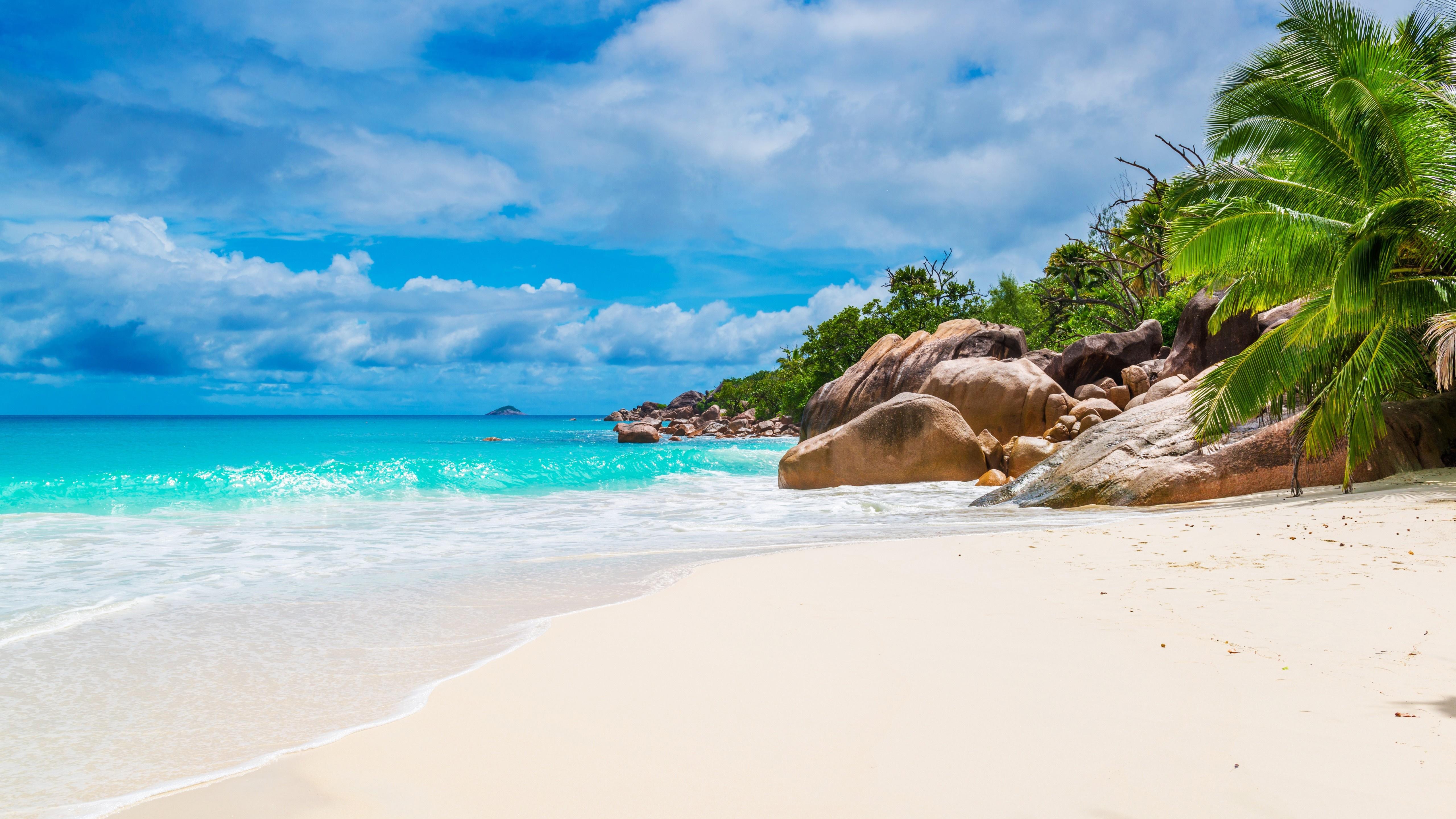 Tropical sandy beach 🌴 wallpaper