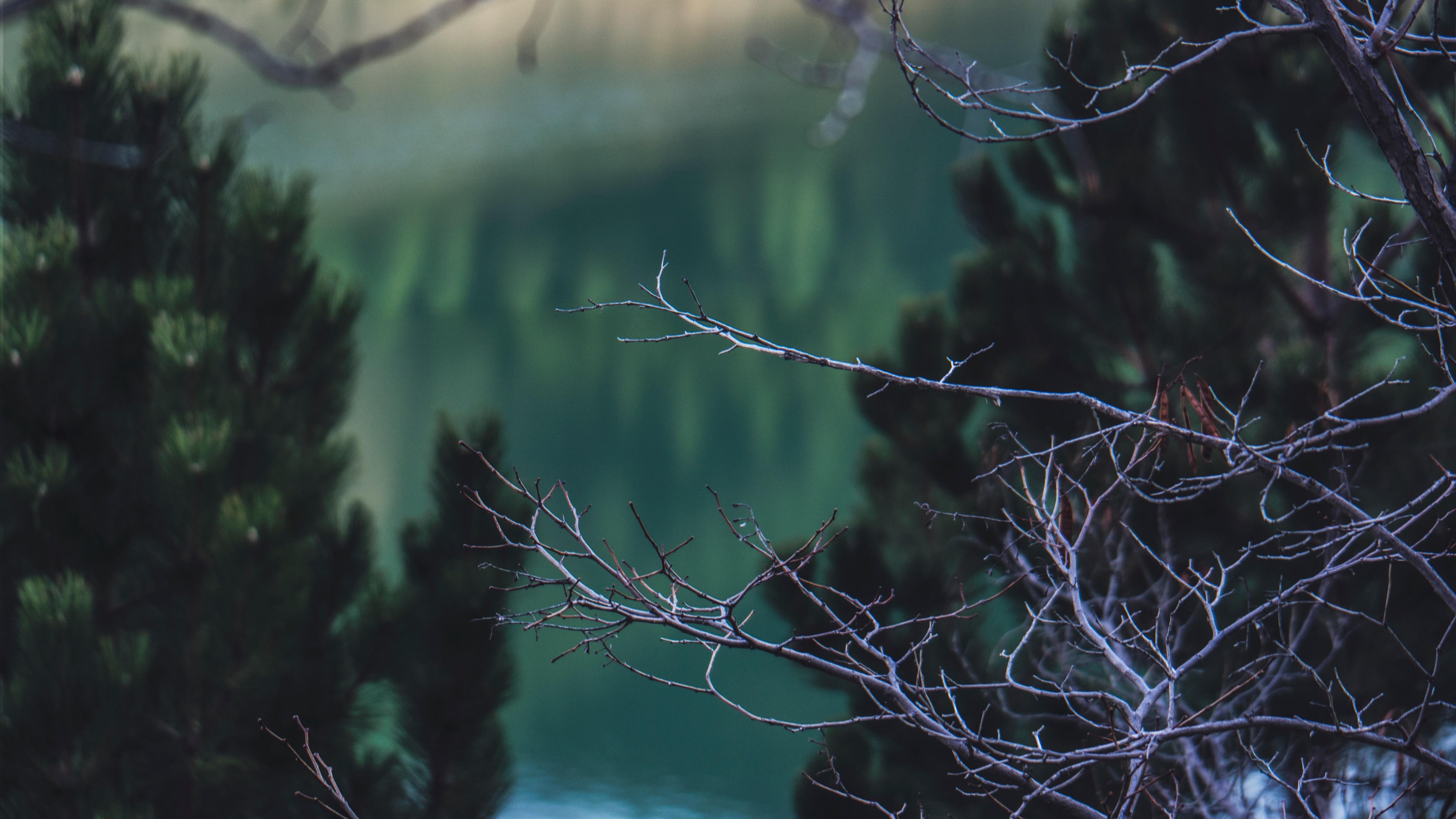 Blur branches wallpaper