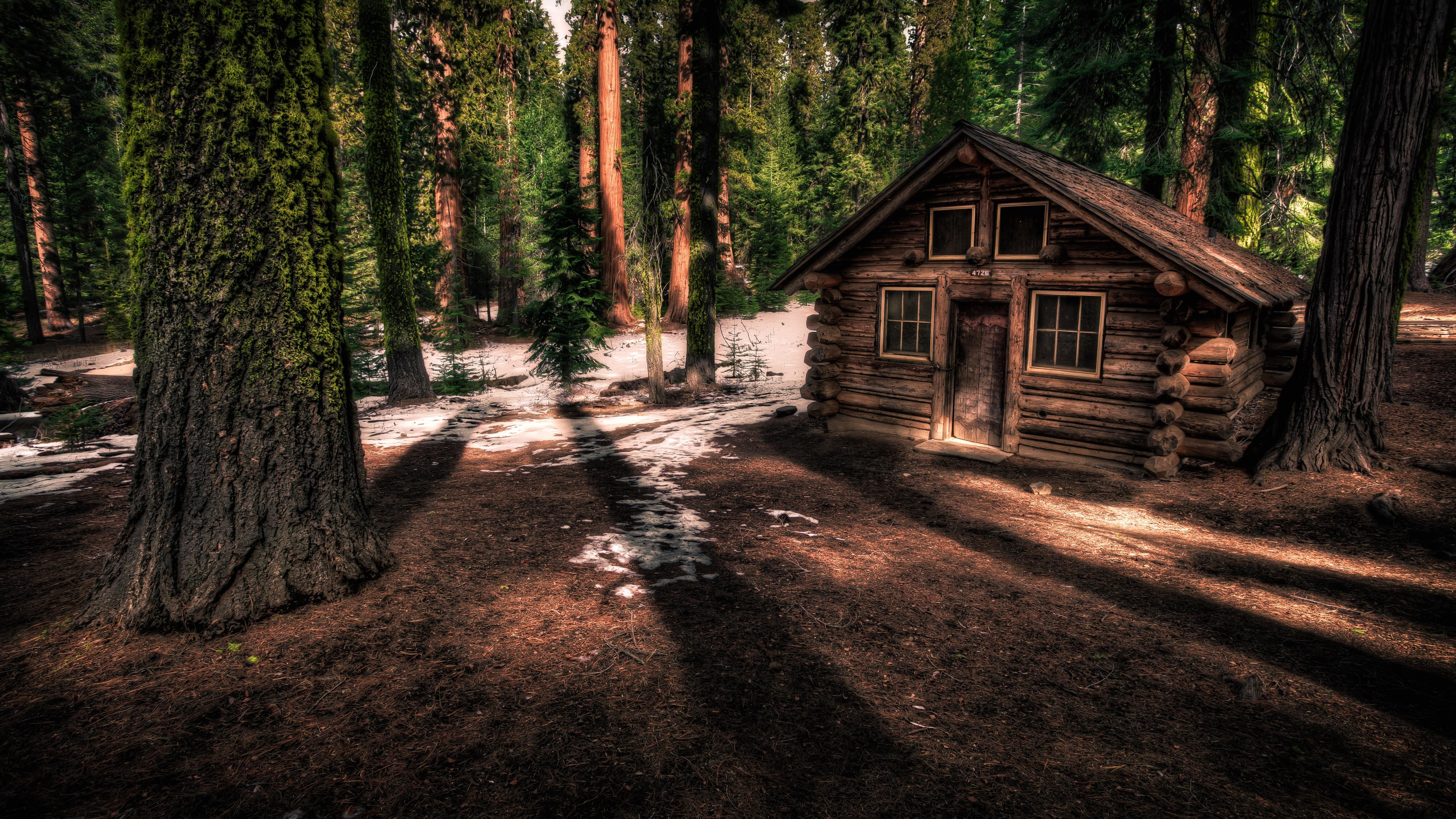 Forest shelter in Yosemite National Park, California wallpaper
